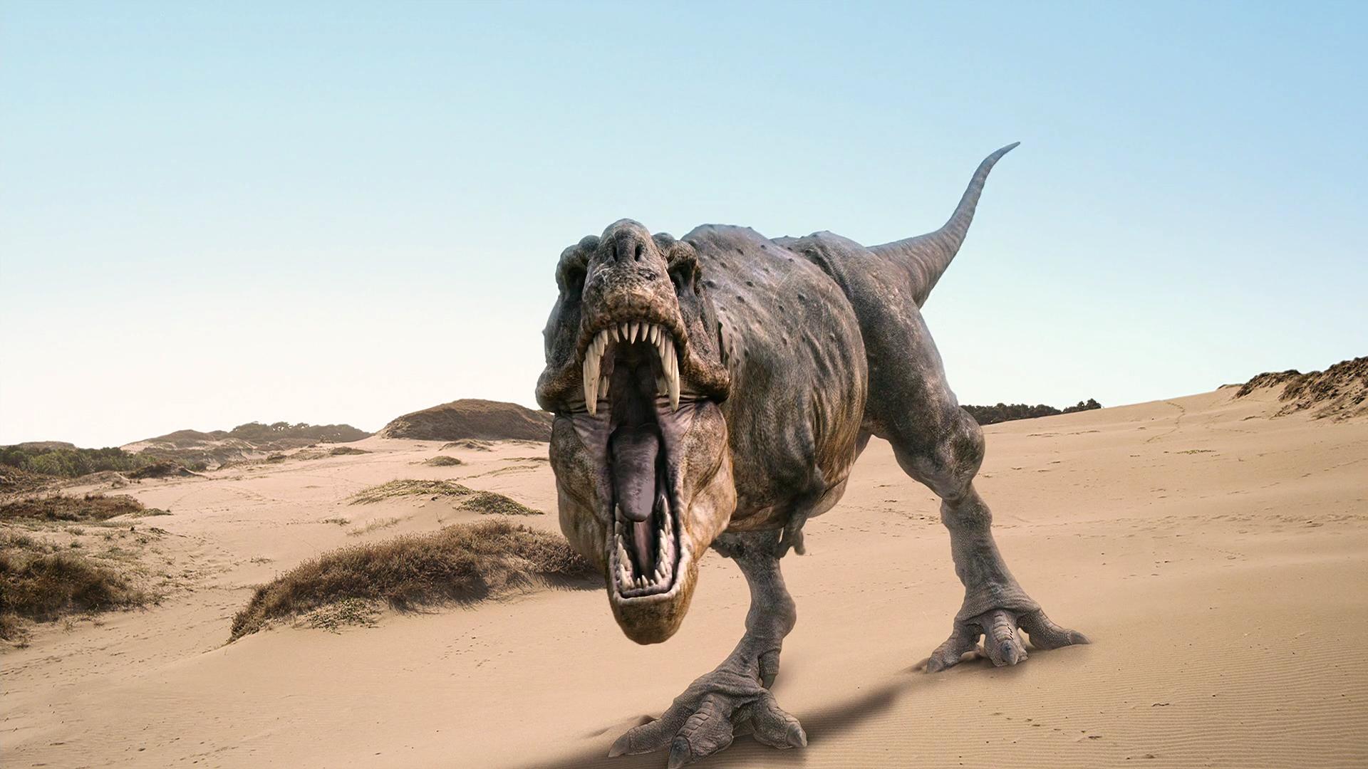 Setiim fotoraflar Dinozor 1920x1080