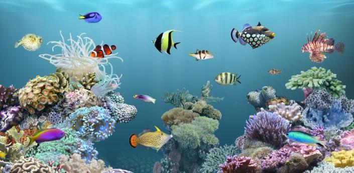 Android Live Wallpaper live fish wallpaper 705x344