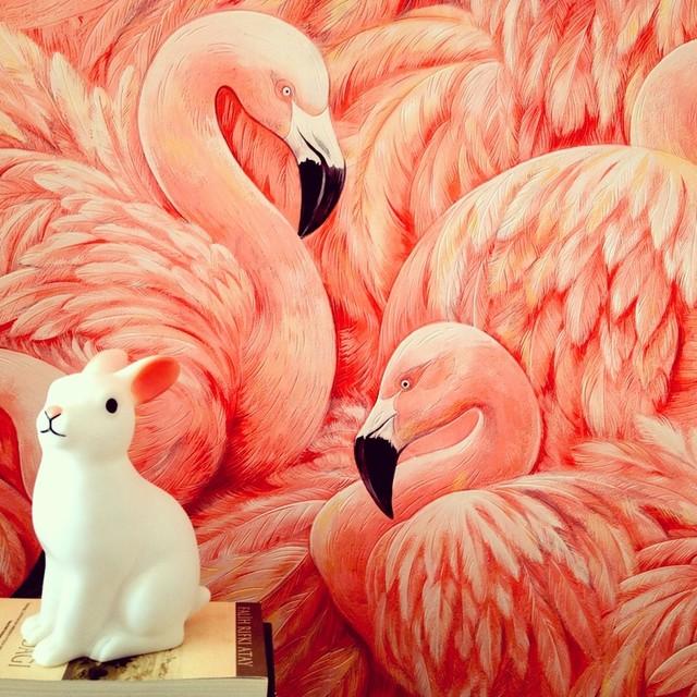 Flamingo Wallpaper   Residential Application tropical wallpaper 640x640