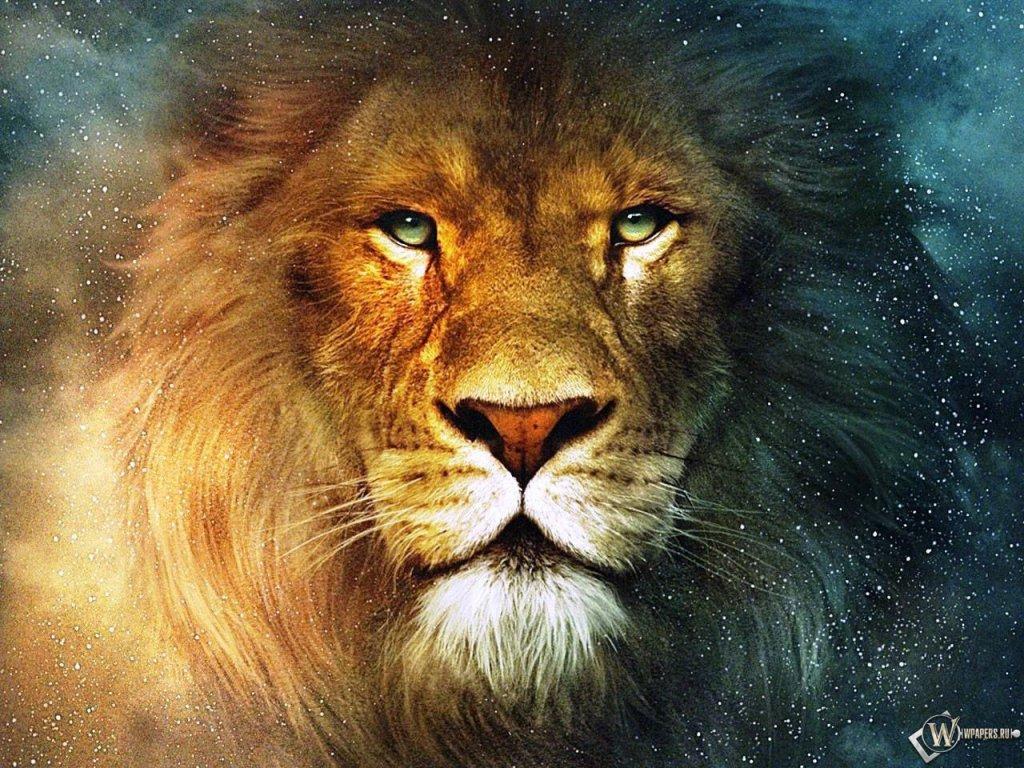 lion face wallpaper - photo #11
