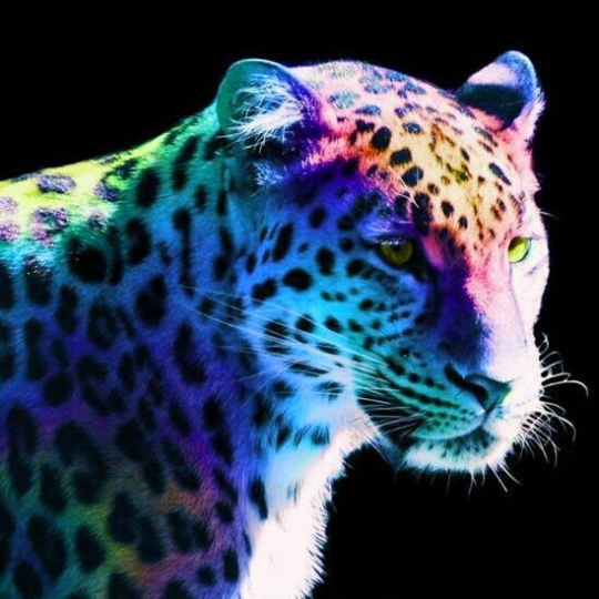 Rainbow Cheetah Wallpaper Wallpapersafari