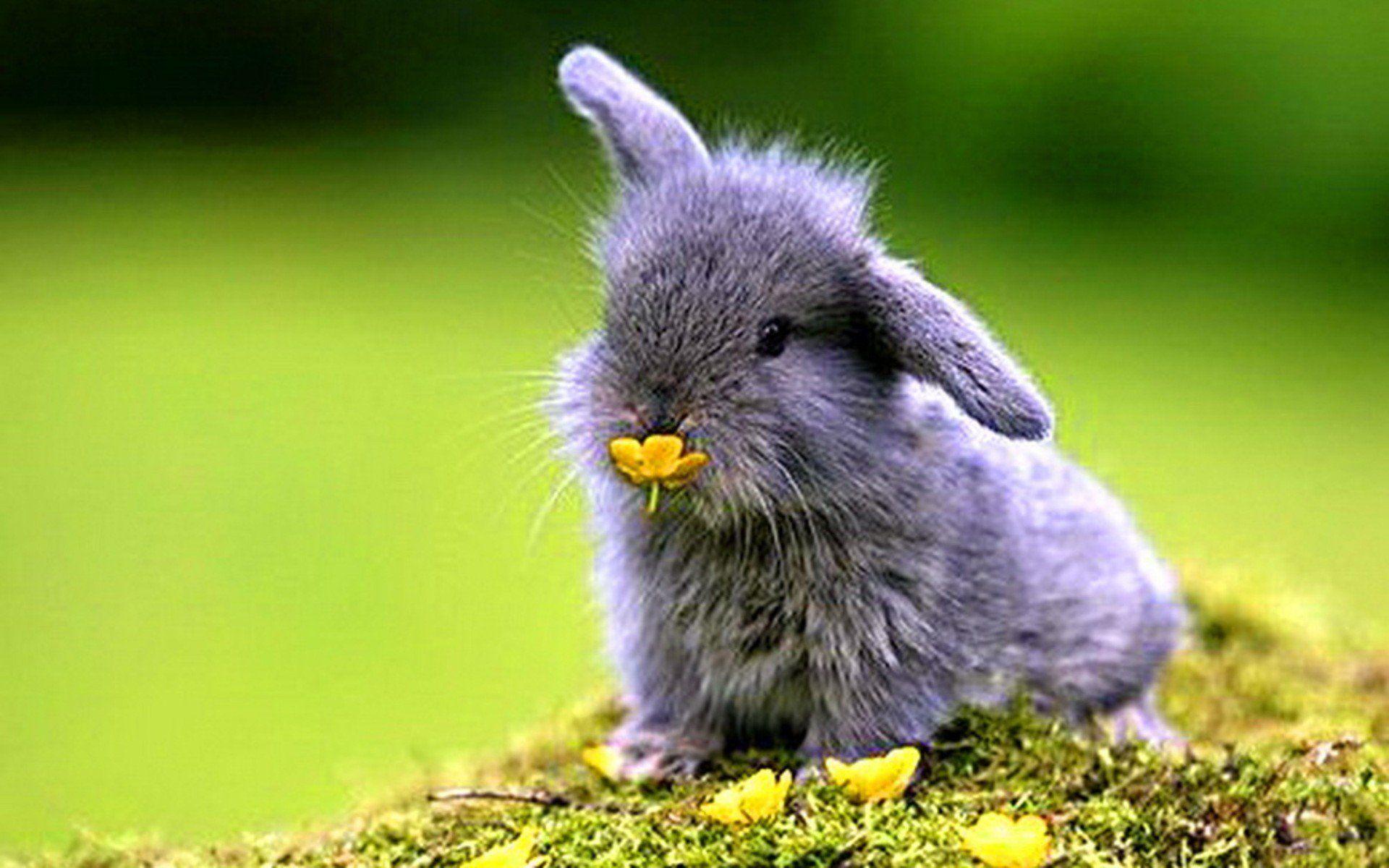 High Resolution Live Bunny Backgrounds   Derick Wrinkle download 1920x1200