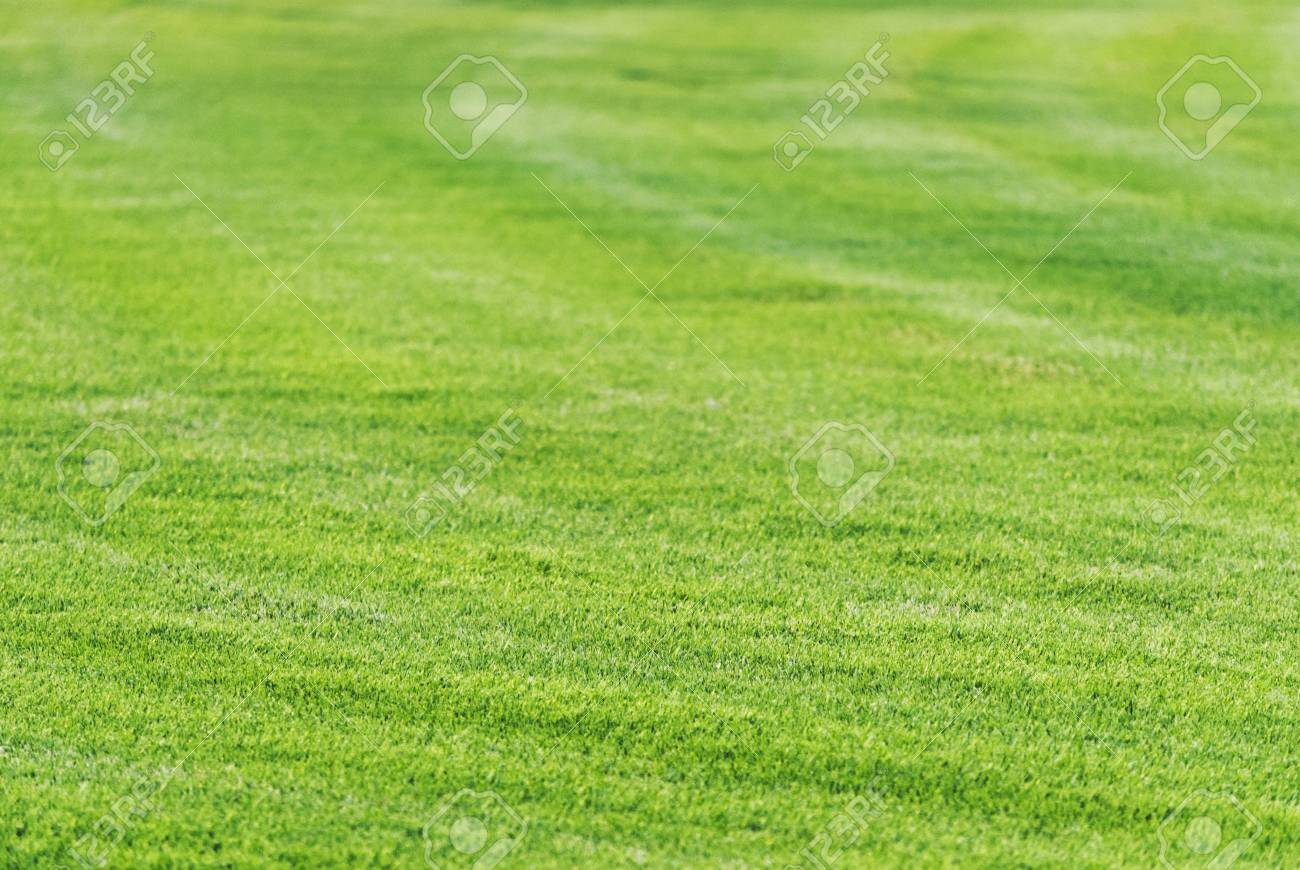 Perfect Mowed Green Grass Lawn Background Golf Course Playground 1300x870