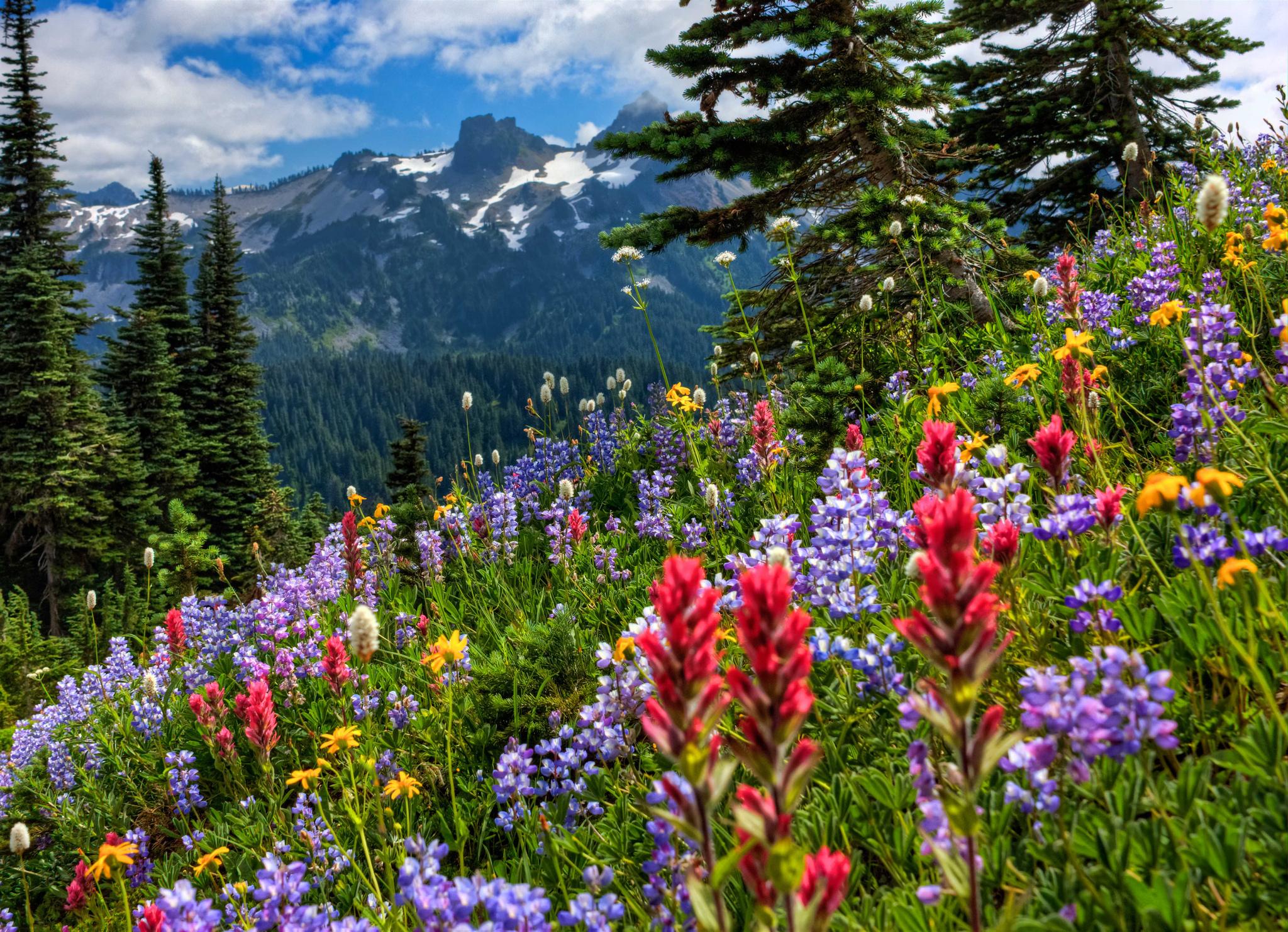 Mount Rainier National Park mountains meadow flowers wallpaper 2048x1482