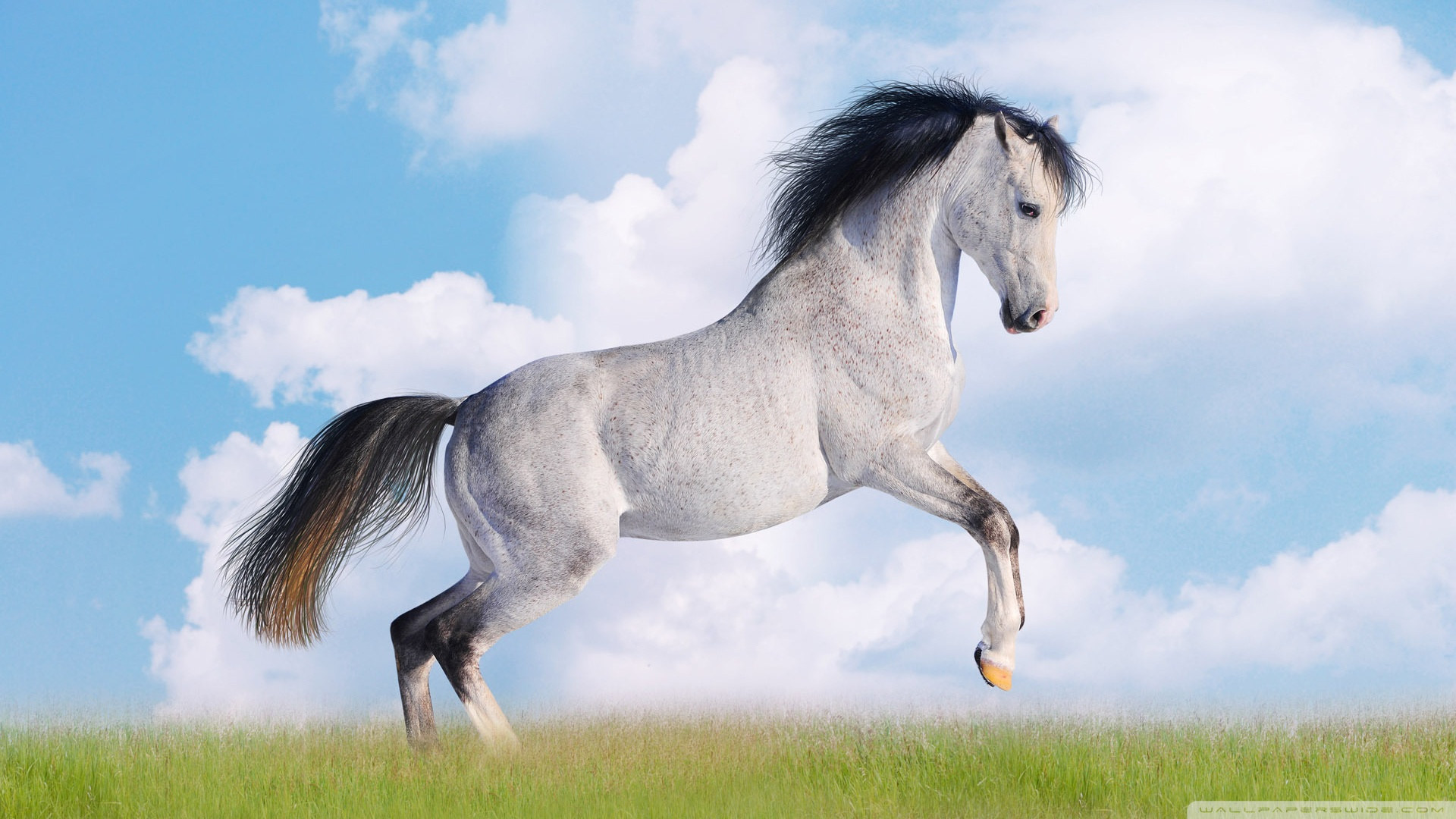 White Horse 4K HD Desktop Wallpaper for 4K Ultra HD TV Tablet 1920x1080