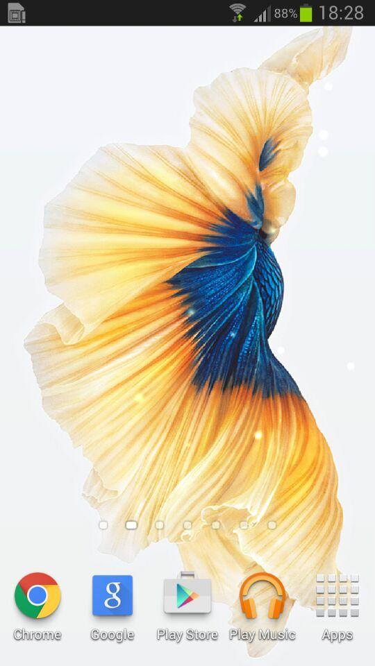 Download Gratis Betta Fish For Galaxy S6 EdgeGratis Betta Fish For 540x960