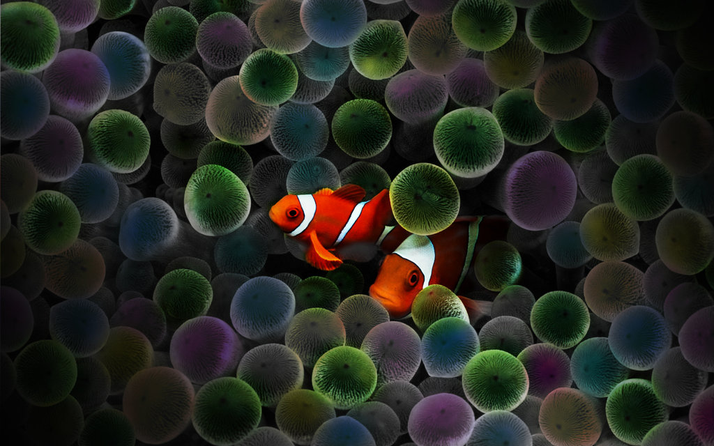 Circus Clown Fish by rebstile 1024x640