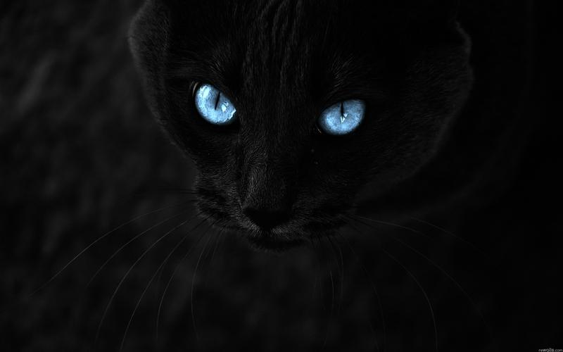 46 Black Panther Blue Eyes Wallpaper On Wallpapersafari