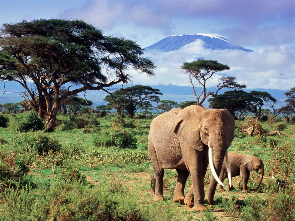 Hd wallpaper elephant - Elephant Hd Wallpapers Download Elephant Desktop Hd Wallpapers Hd