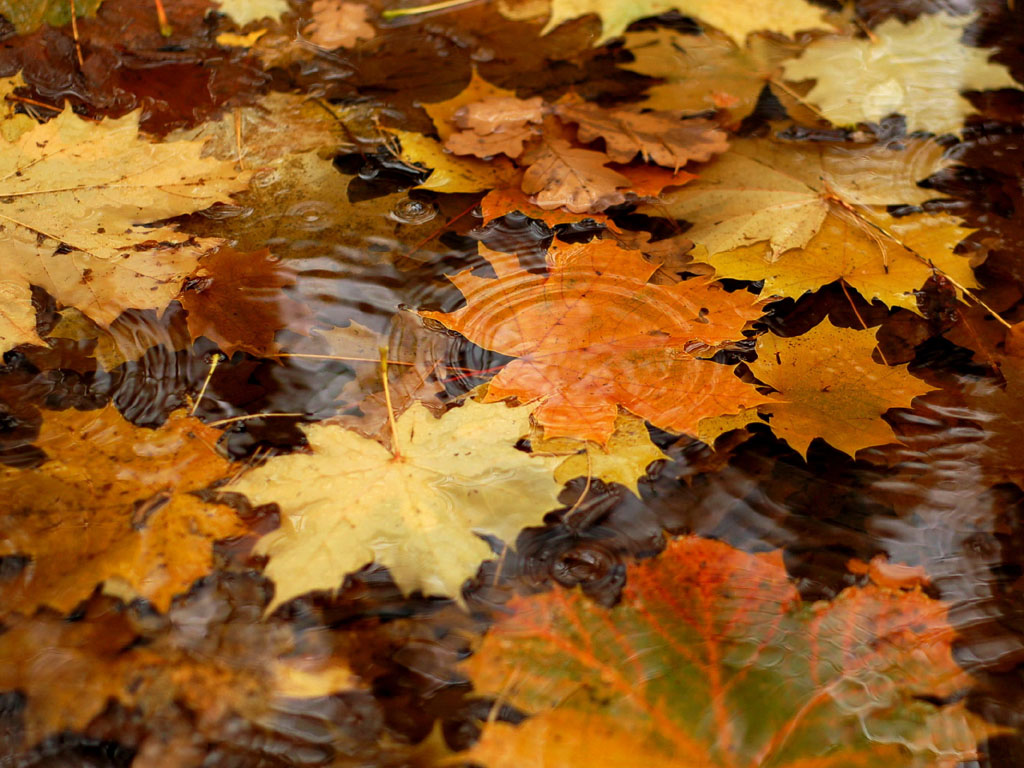 Wallpapers Windows 7 Autumn Desktop Backgrounds Windows 7 Autumn 1024x768