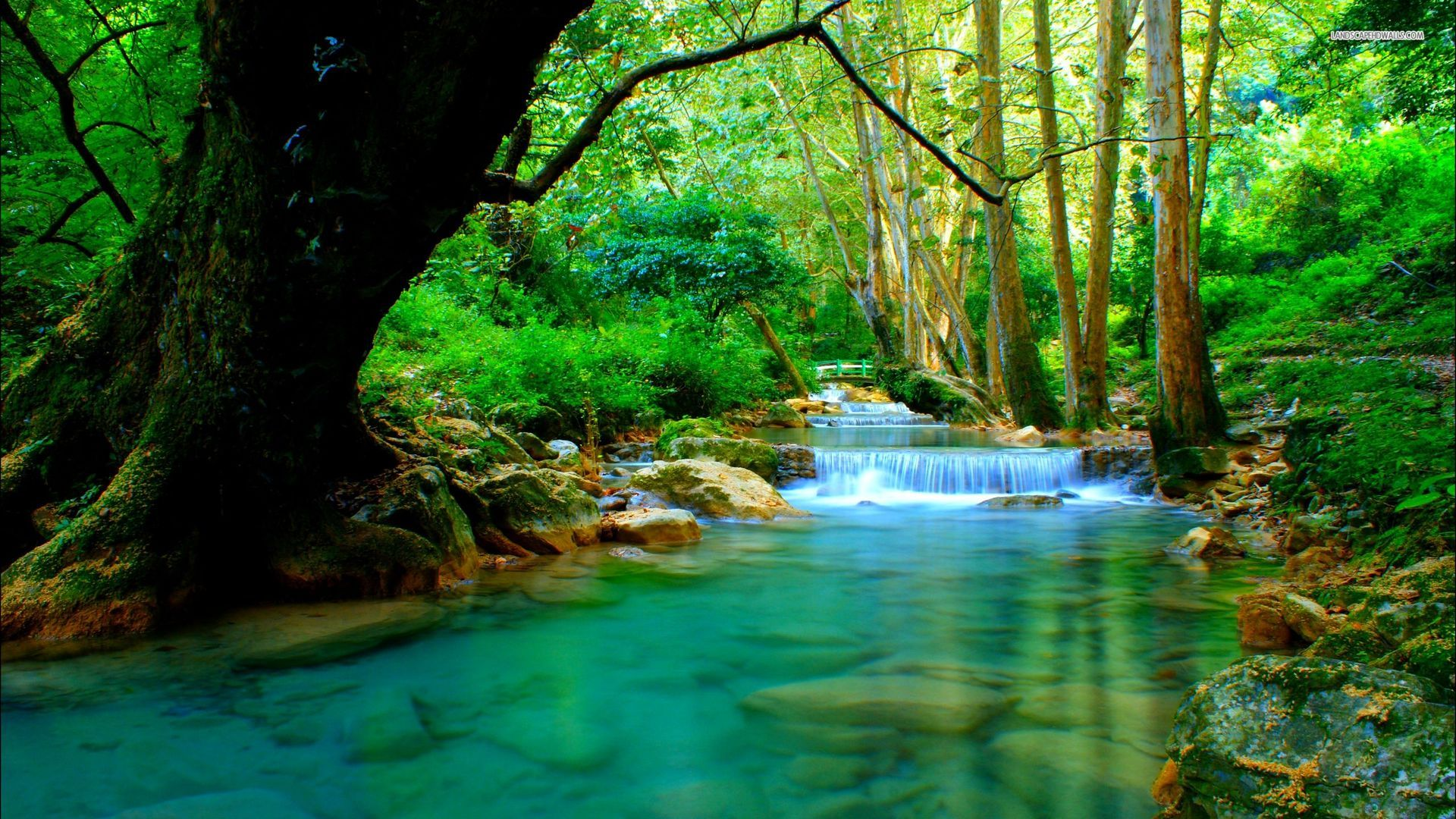 Beautiful forest wallpapers wallpapersafari for Forest wallpaper