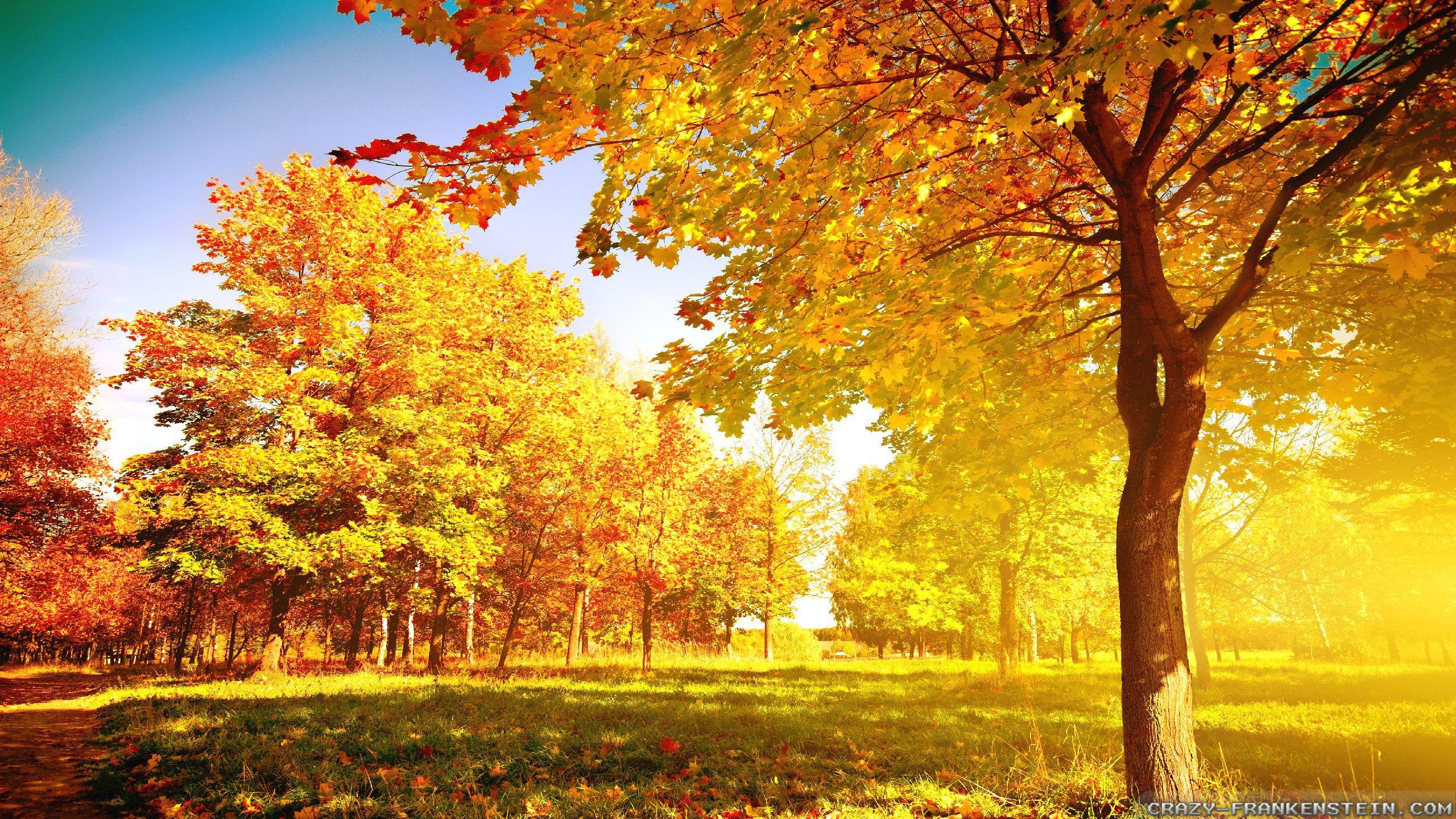Autumn Tree Wallpaper HD Wallpapers Pulse 2560x1440