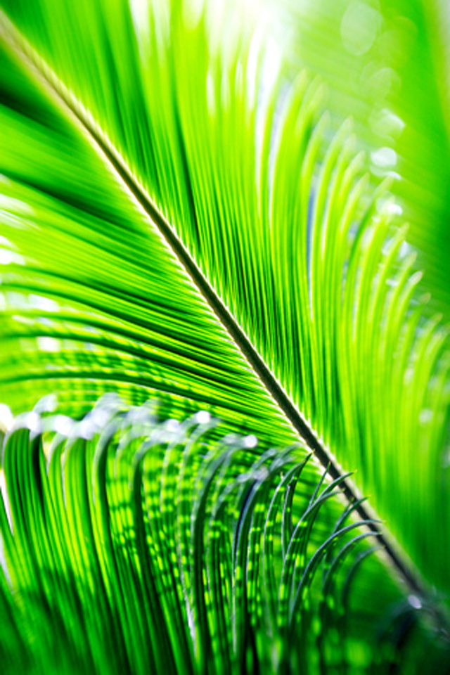 Green palm leaf wallpaper for iPhone 44s 640x960