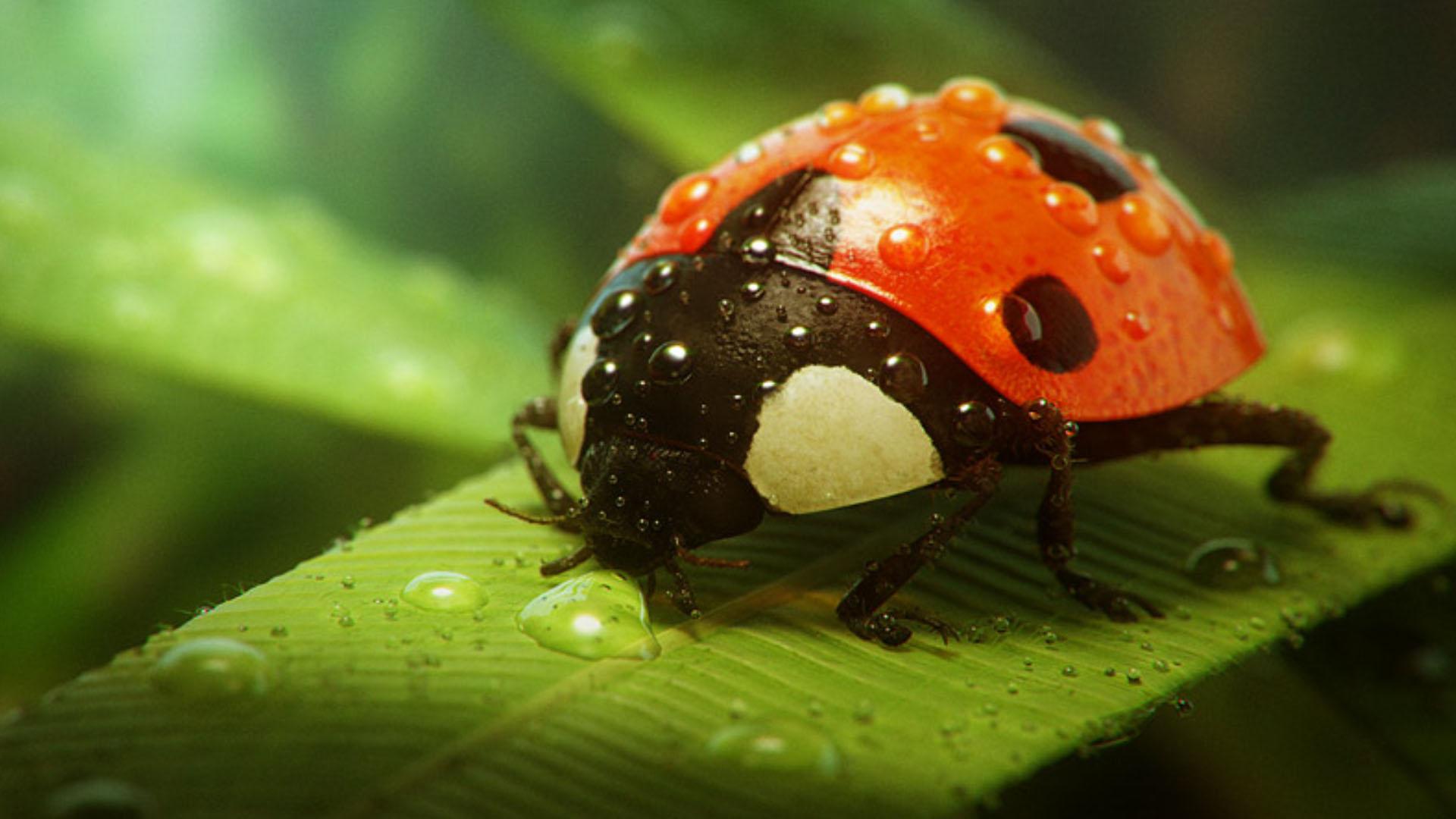 природа насекомое божья коровка цветок  № 3008143 загрузить