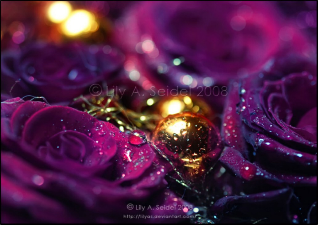 Purple Gold wallpaper   ForWallpapercom 1032x730