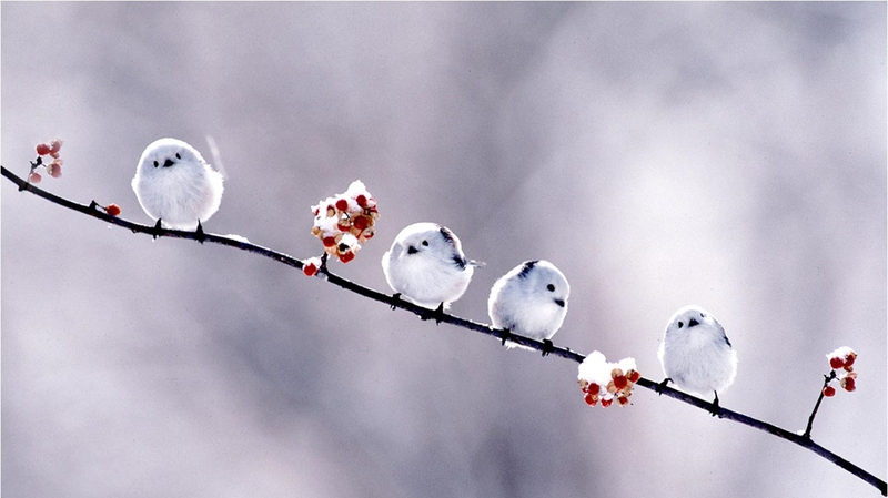 2575 Category Animals Hd Wallpapers Subcategory Birds Hd Wallpapers 800x449