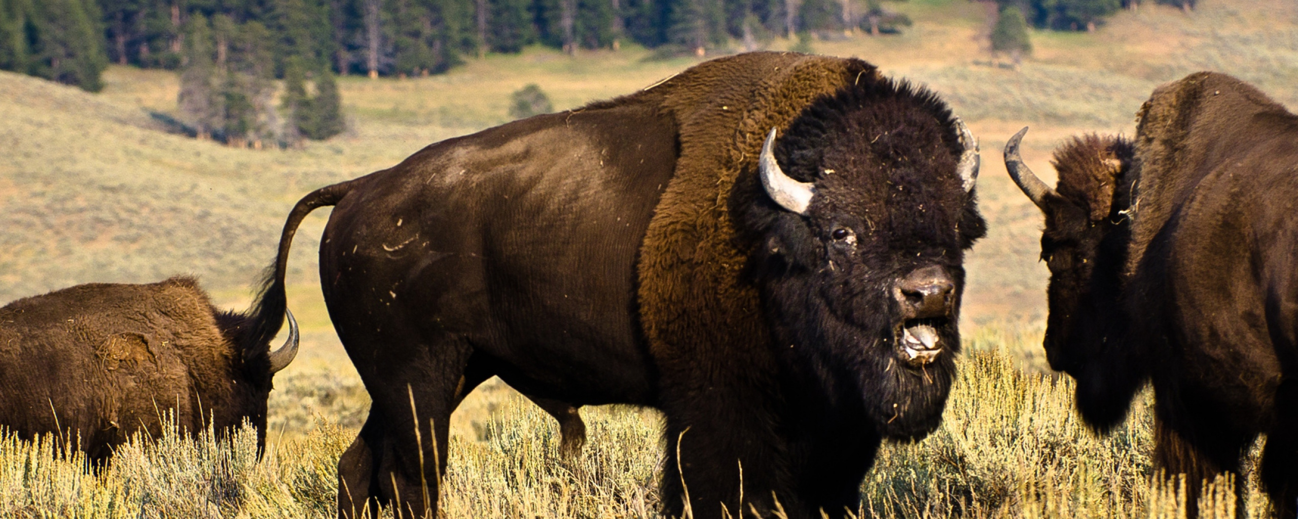 Wallpaper Buffalo Download Viewer Tolson Girls Water 10649 Picture 2560x1024