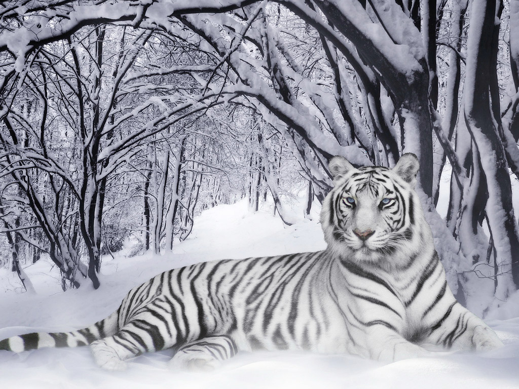 Animals Wallpapers cute white tigers wallpapers 1024x768
