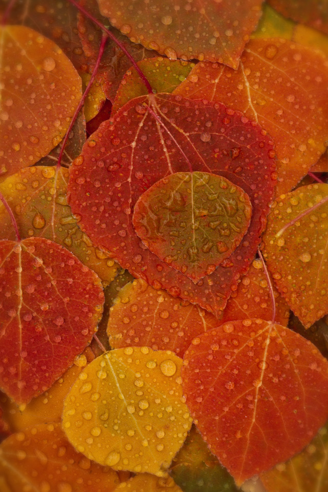 fall leaves iphone wallpaper retina wallpapers   Quotekocom 640x960