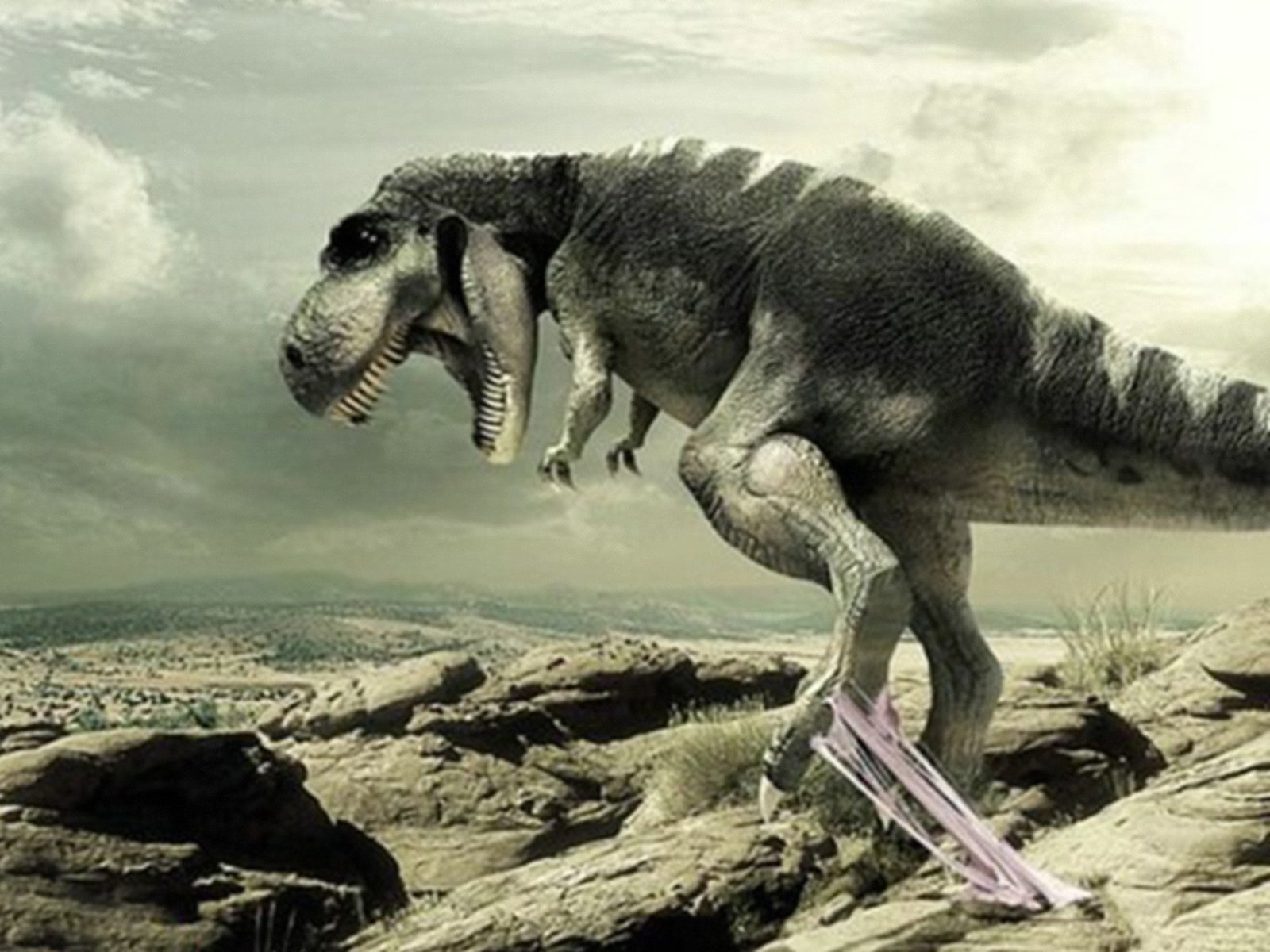 High Definition Photo And Wallpapers dinosaur wallpapers 1600x1200
