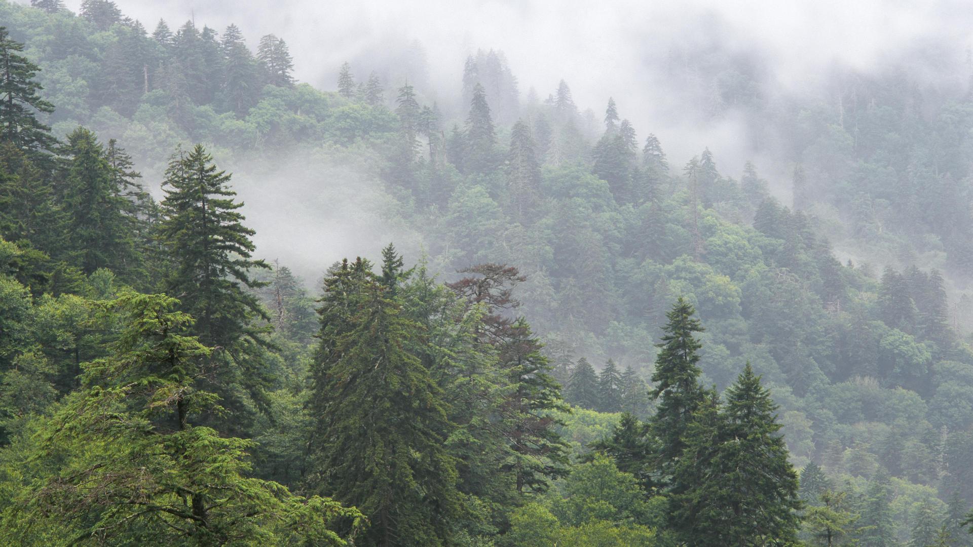 46 Free Smoky Mountain Wallpaper On Wallpapersafari