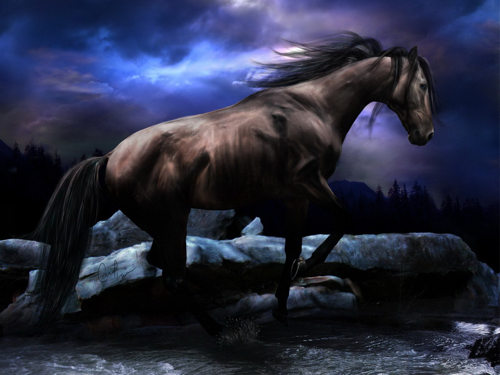 Free Download Black Horse Wallpaper Animals Wallpapers Wallpapers