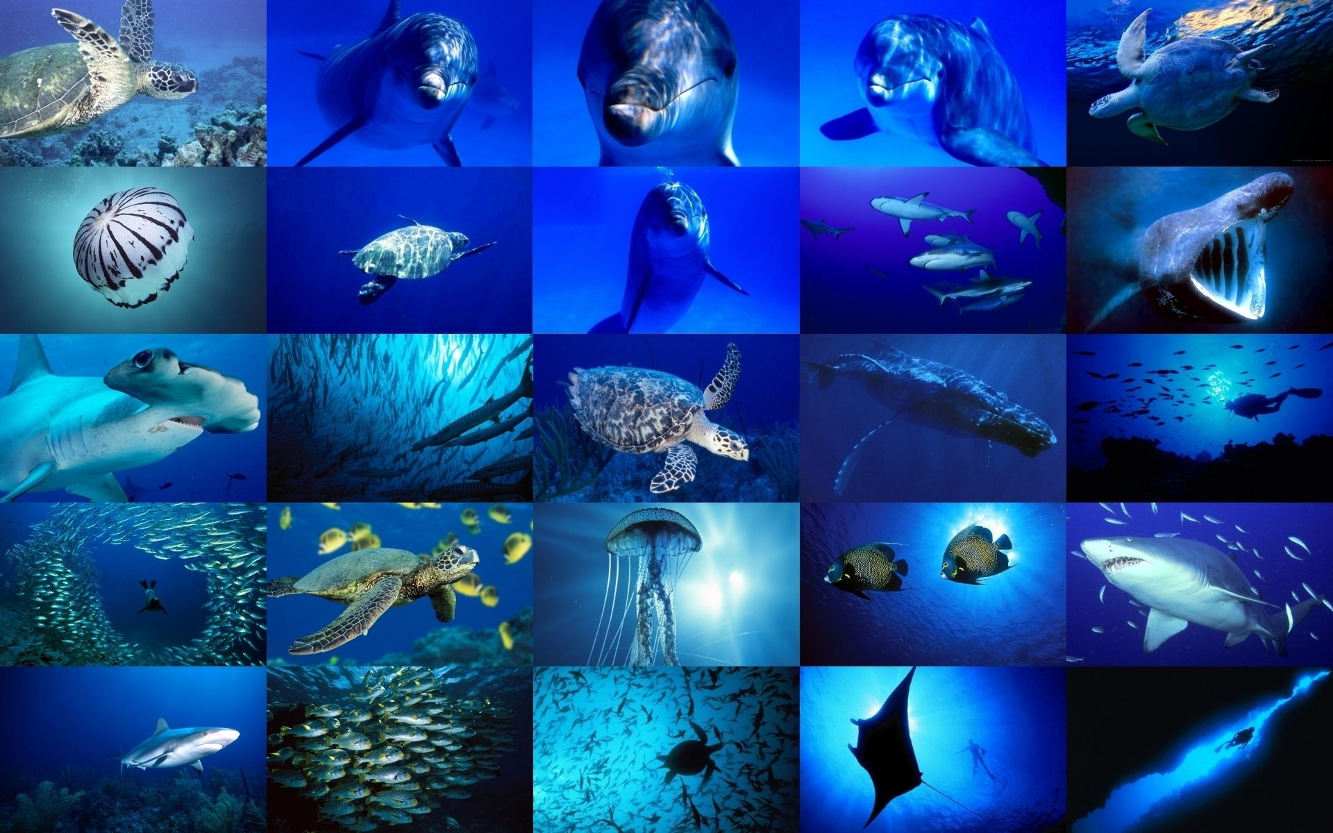 Sea Life images Sea Life HD wallpaper and background 1920x1200