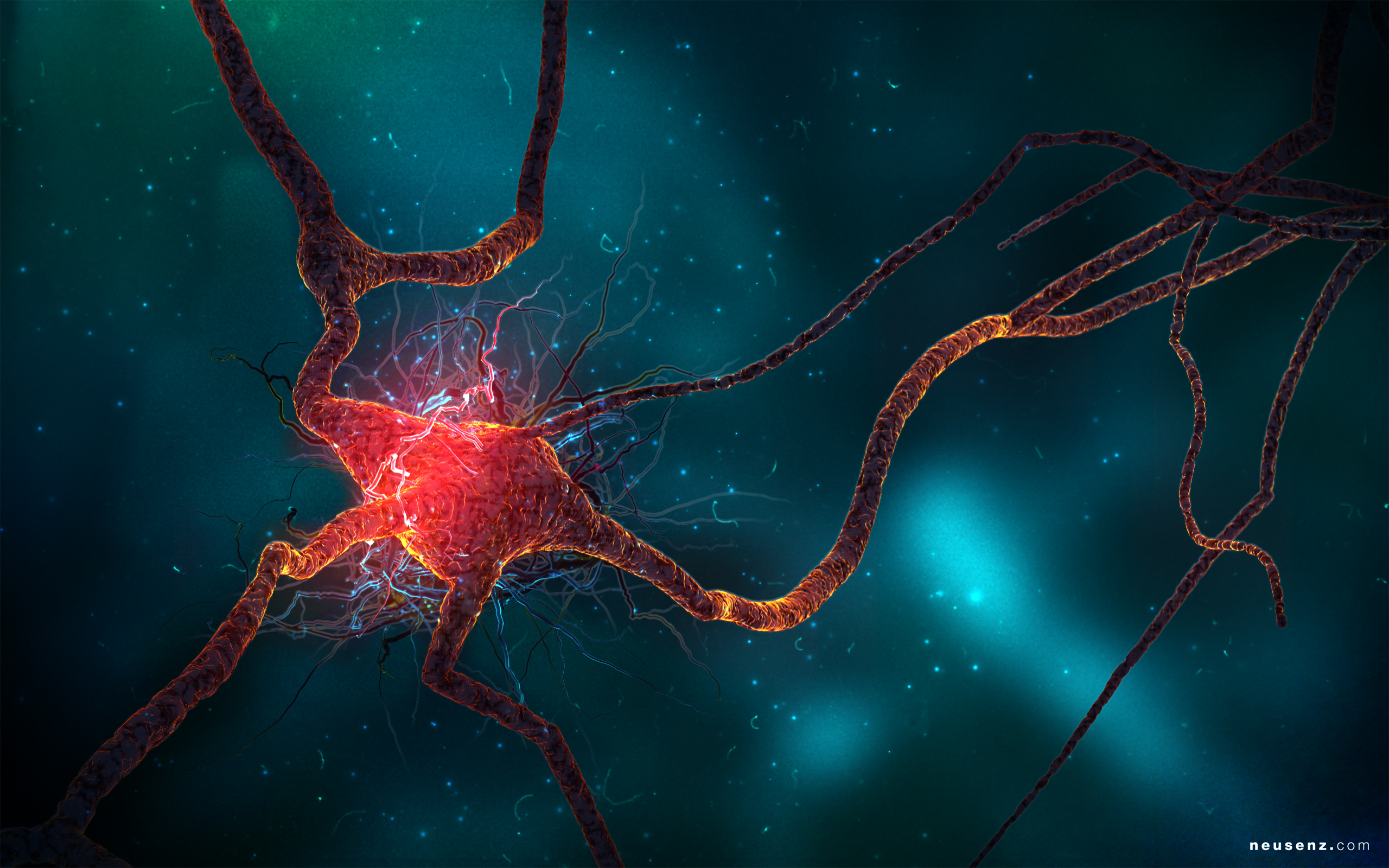 Neuron Cell Wallpapers HD Wallpapers 2560x1600