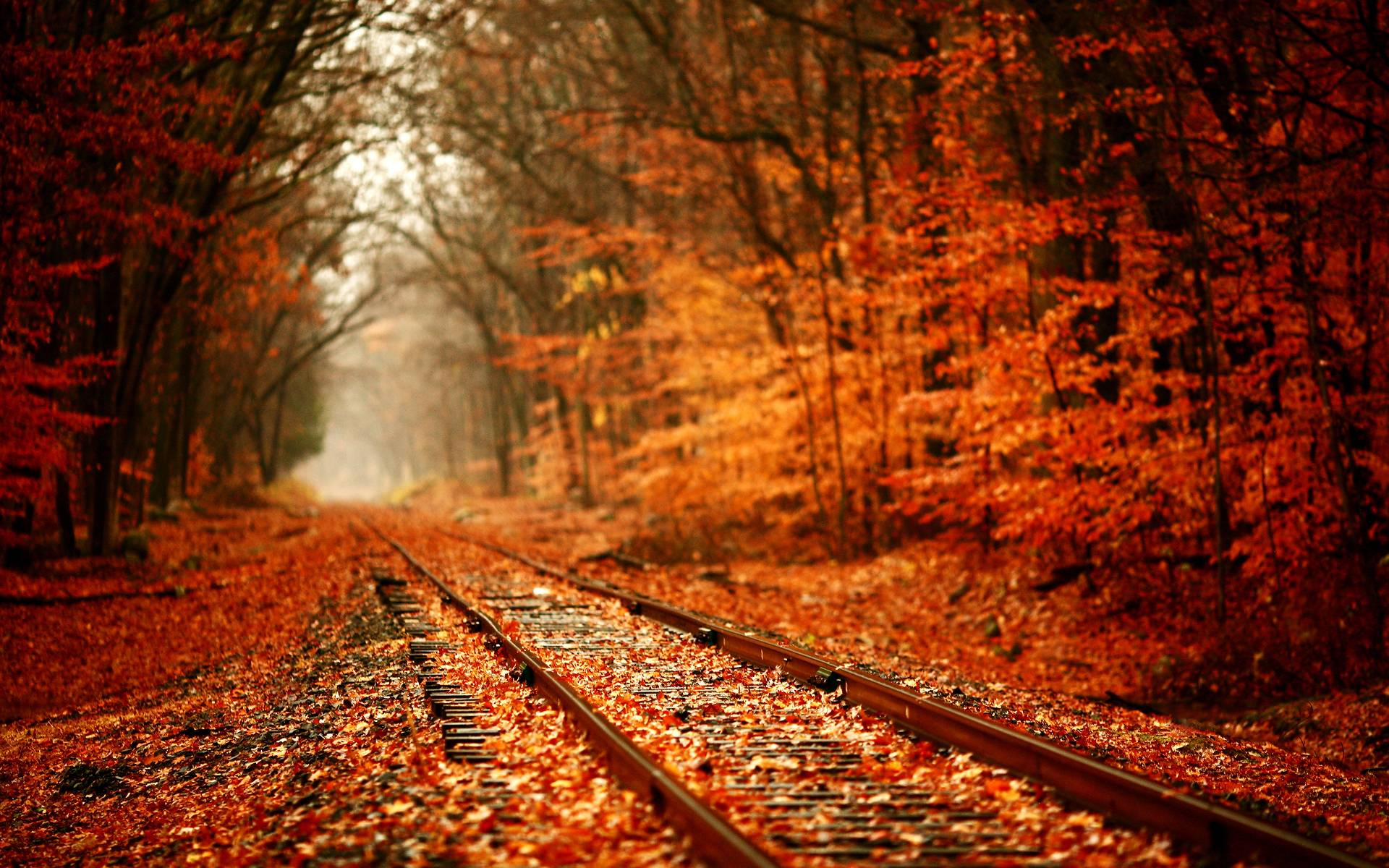 Autumn Leaves Wallpaper 1920x1200