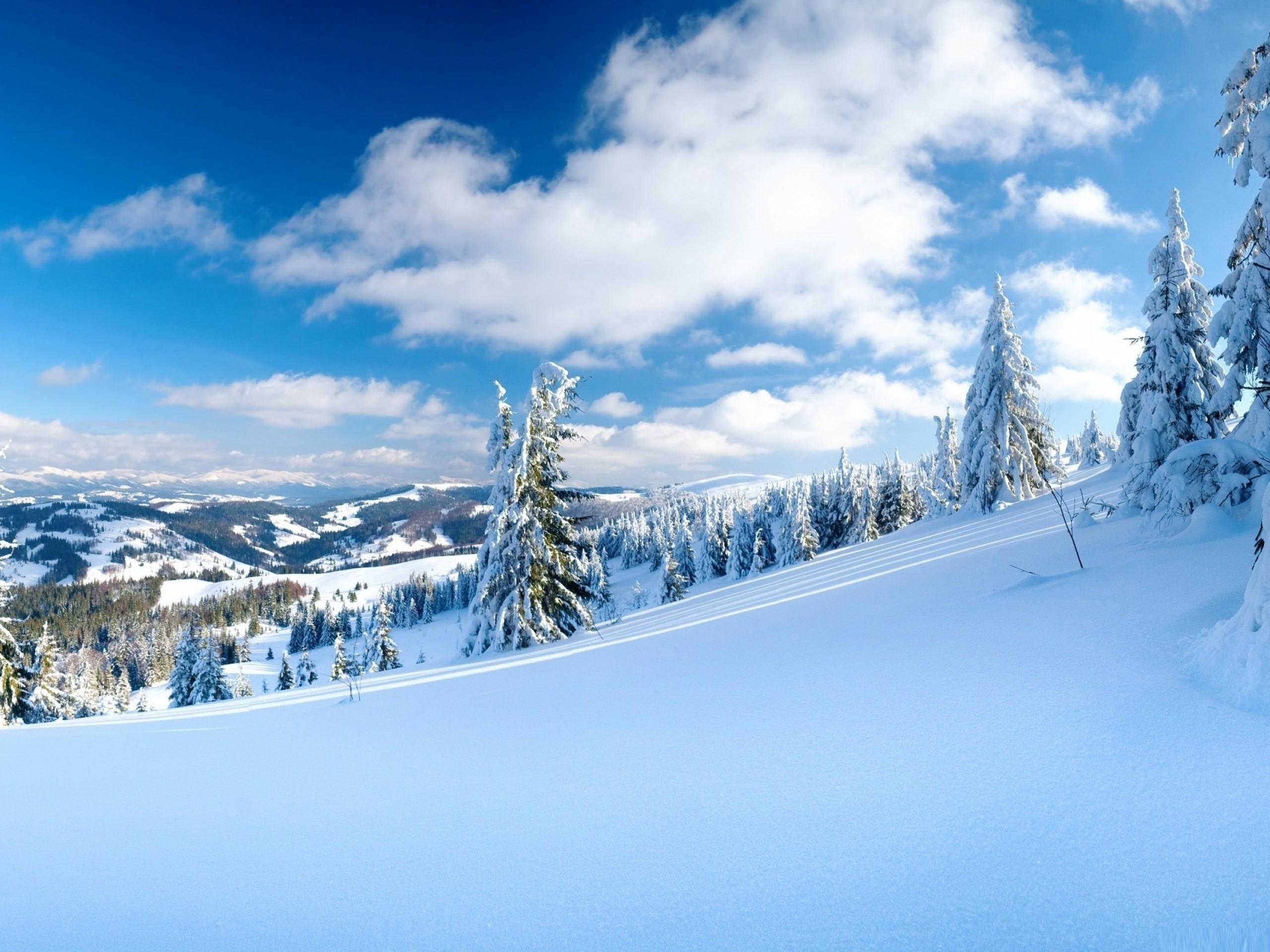 природа деревья ели зима снег небо  № 2803177 без смс