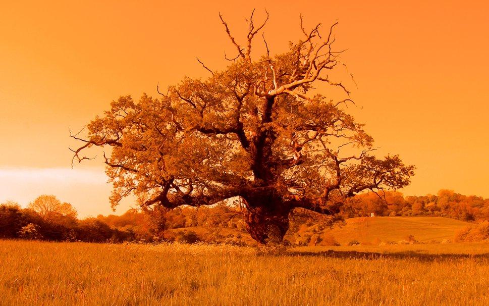 Tree of Life wallpaper   ForWallpapercom 969x606