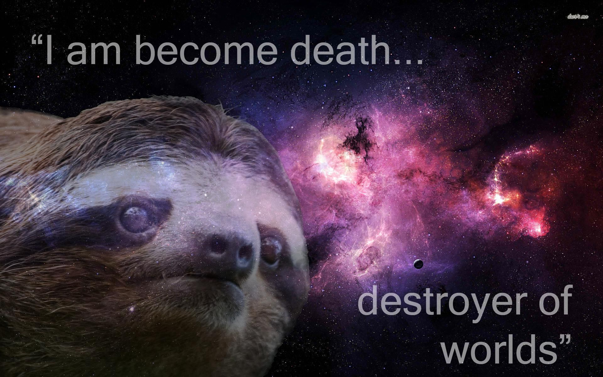 Sloth wallpaper   Funny wallpapers   23674 1920x1200