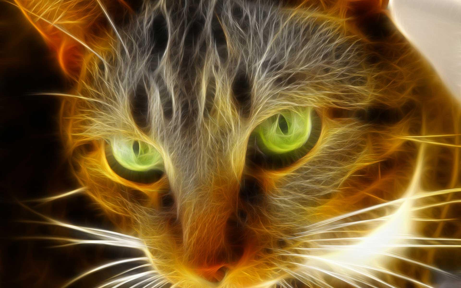 Flaming Cat wallpaper 137185 1920x1200