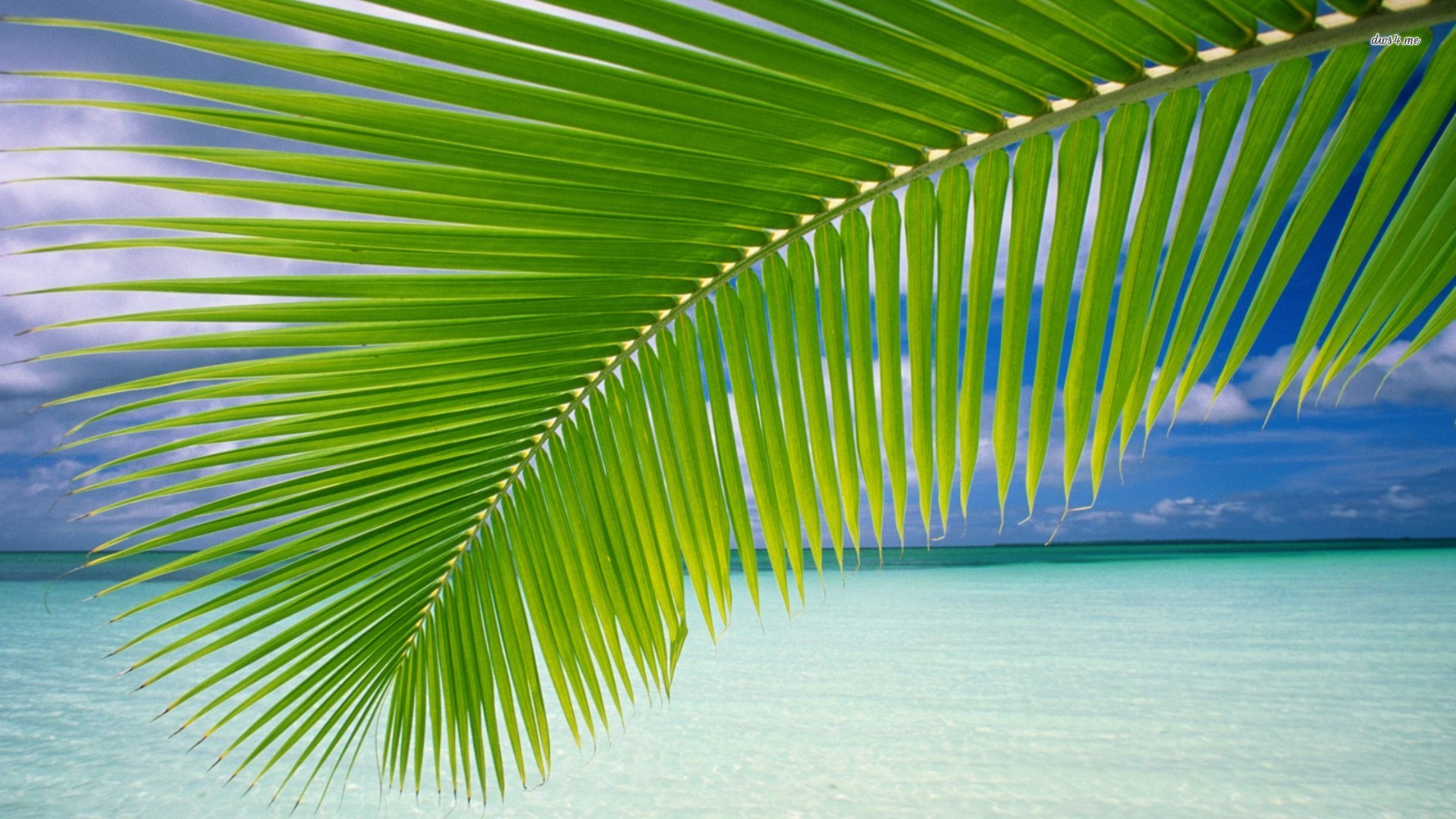 Palm Leaf Wallpaper 1920x1080