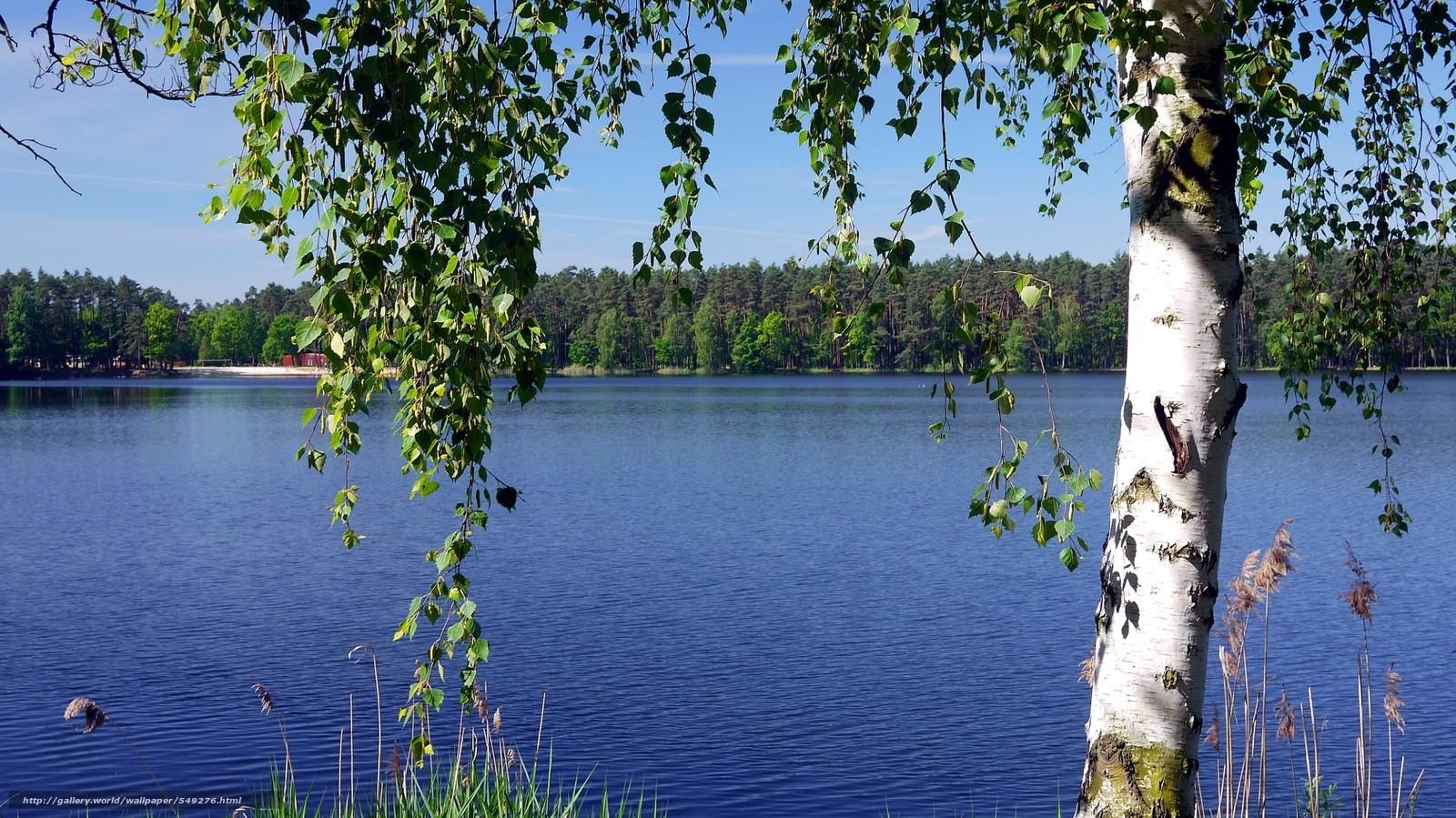 березы берег озеро  № 1195387 без смс