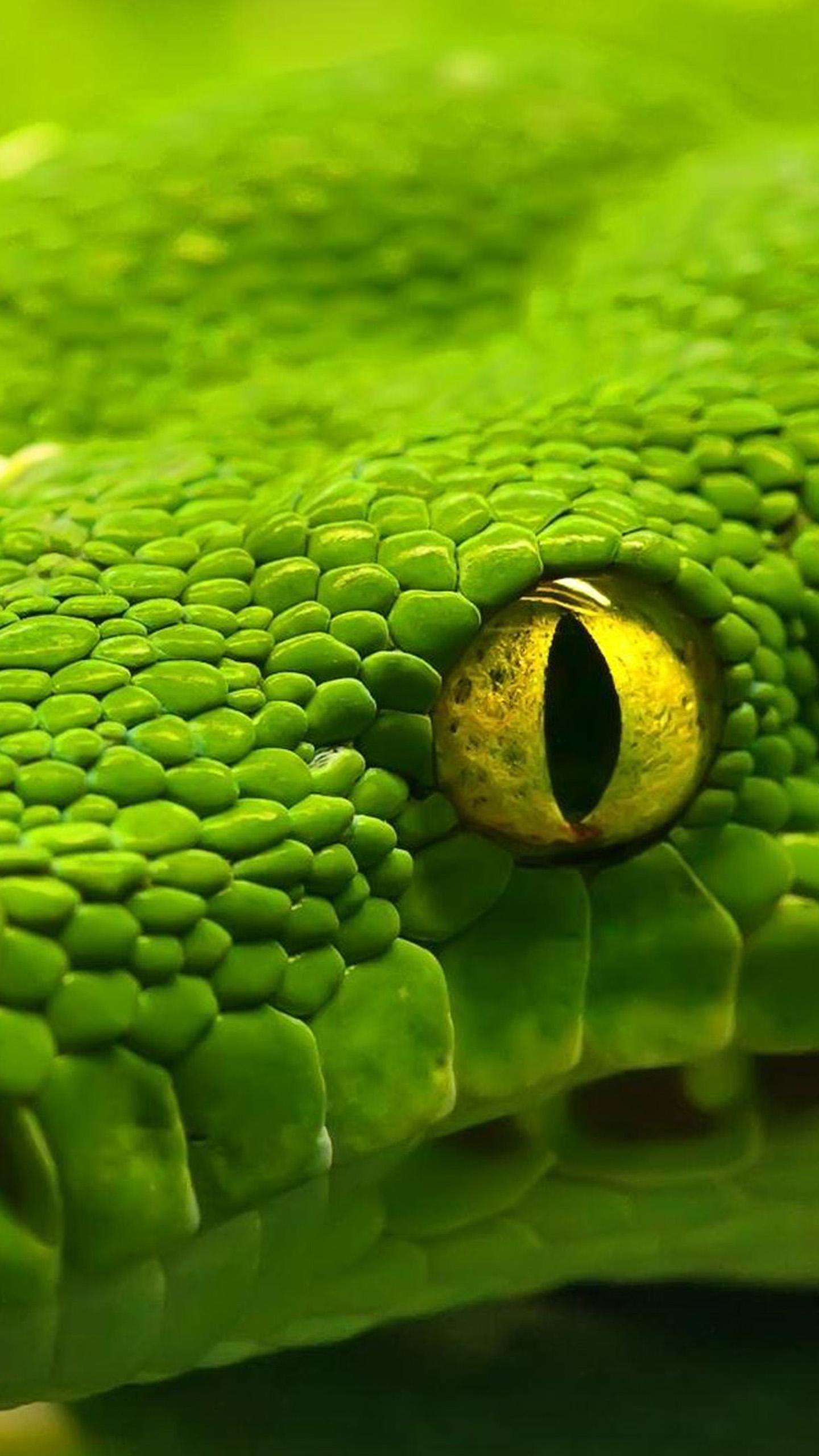 Green Snake Eyes Galaxy S6 Wallpaper Galaxy S6 Wallpapers 1440x2560
