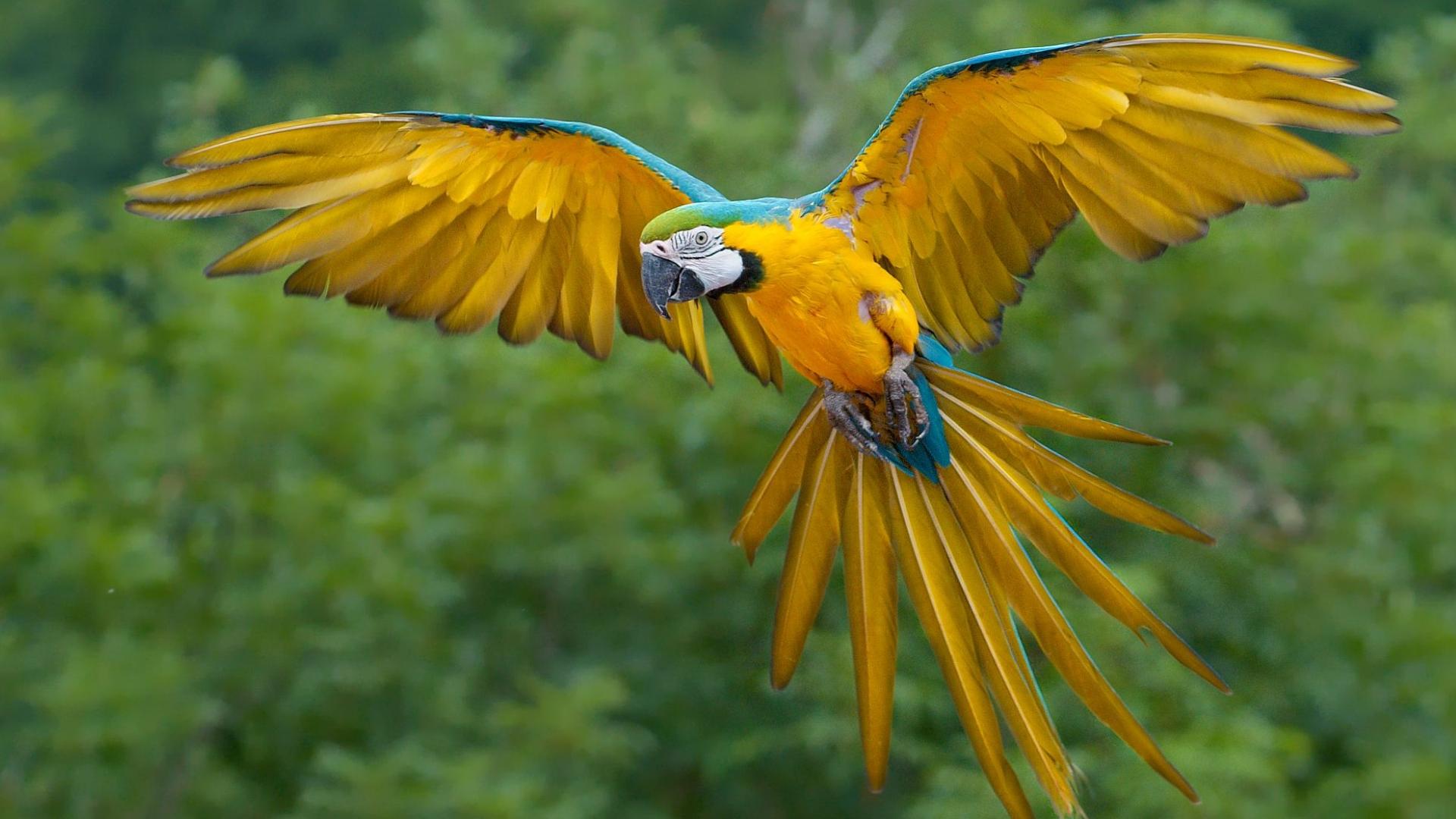 download bird desktop wallpaper which is under the birds wallpapers 1920x1080