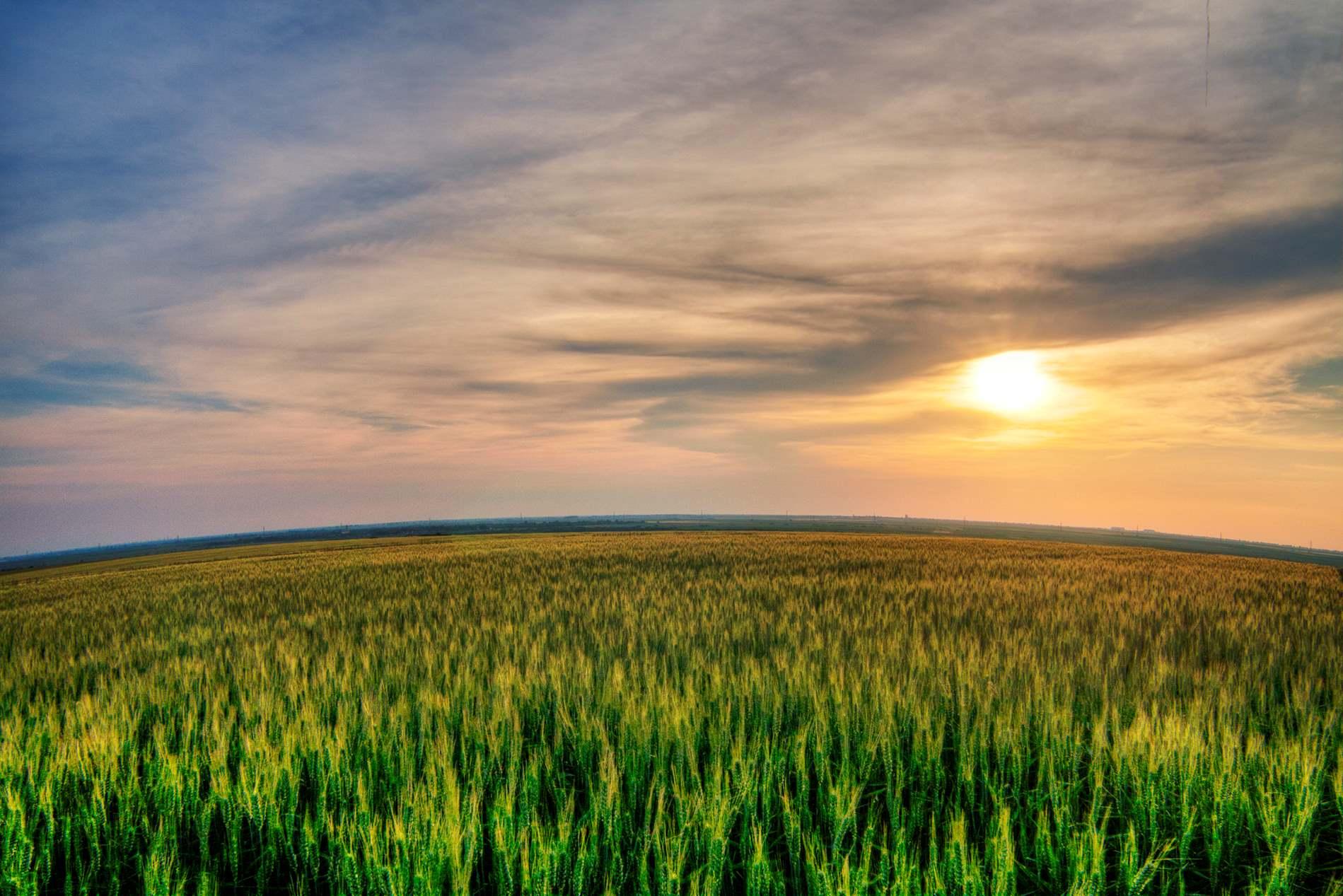 Sunset Sky Green Field Background   PhotoHDX 1899x1267