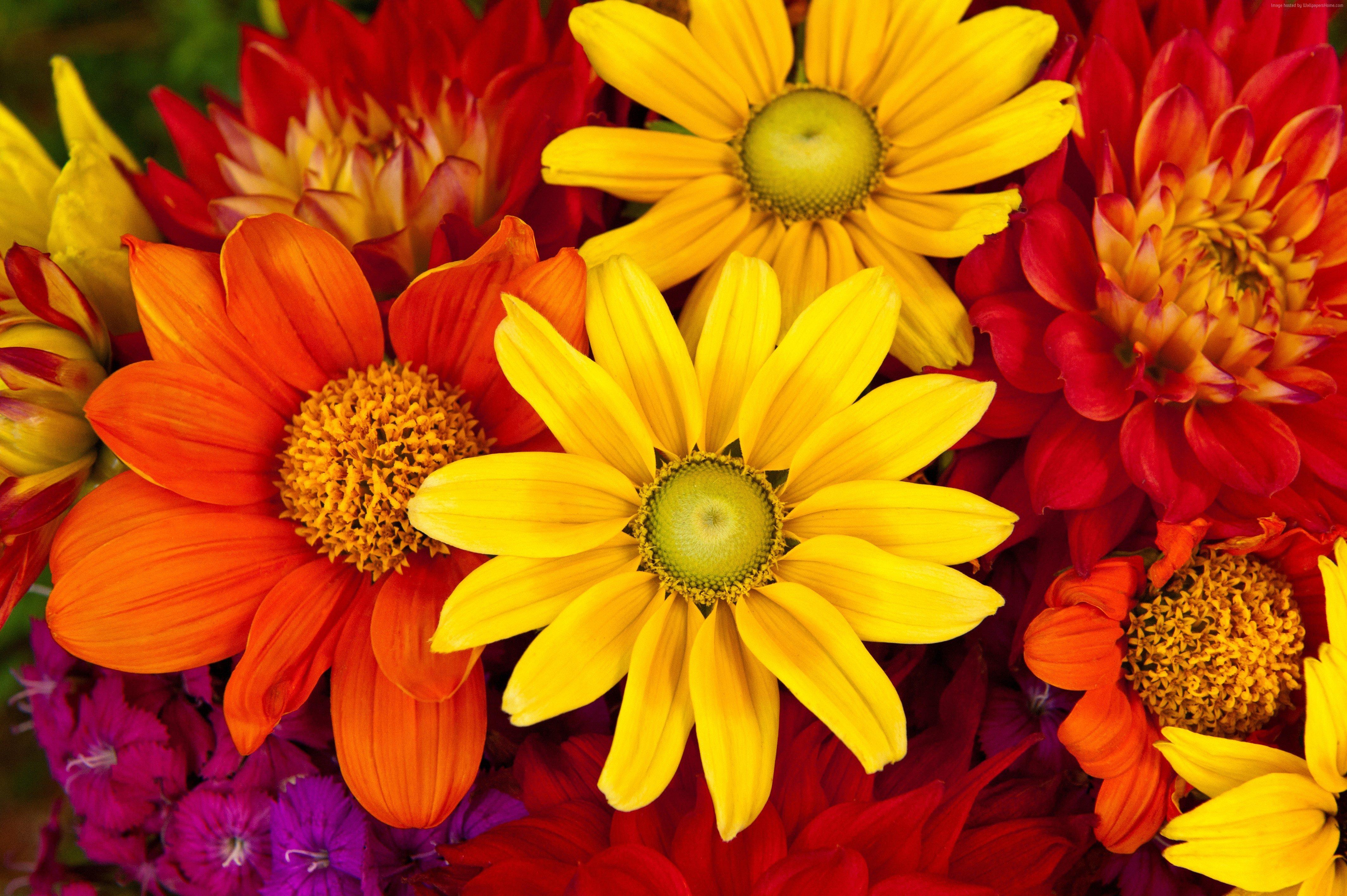 Обои для рабочего стола красивые осенние цветы