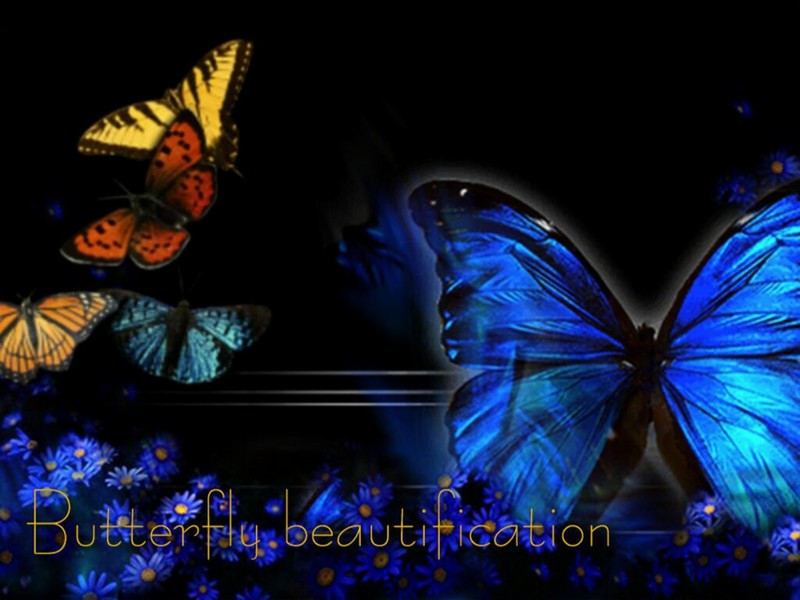 Cool Wallpapers butterfly wallpapers 800x600