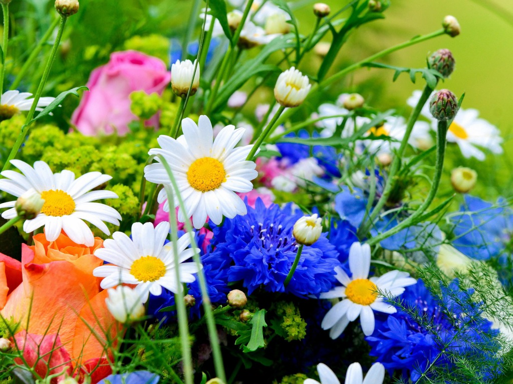 Spring Flowers Wallpapers HD Pictures One HD Wallpaper 1024x768
