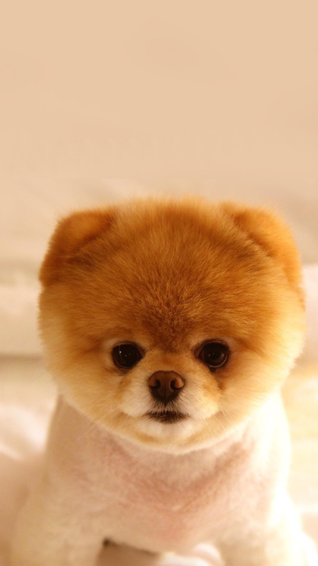 Puppy Cute Wallpaper Home Screen Dog   cuteanimals 1080x1920