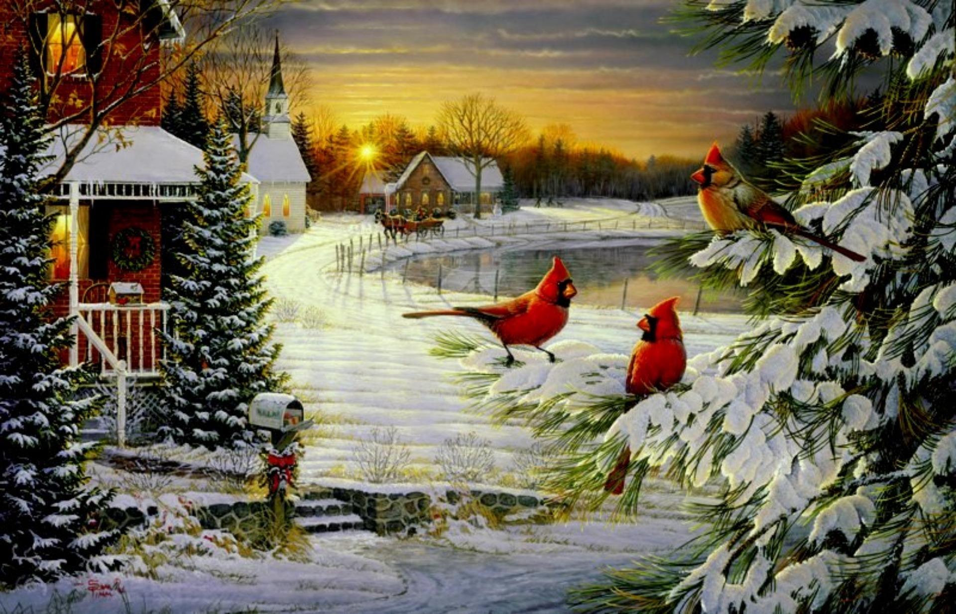 Cardinals birds   Cardinals Christmas Wallpapers   HD Wallpapers 1920x1234
