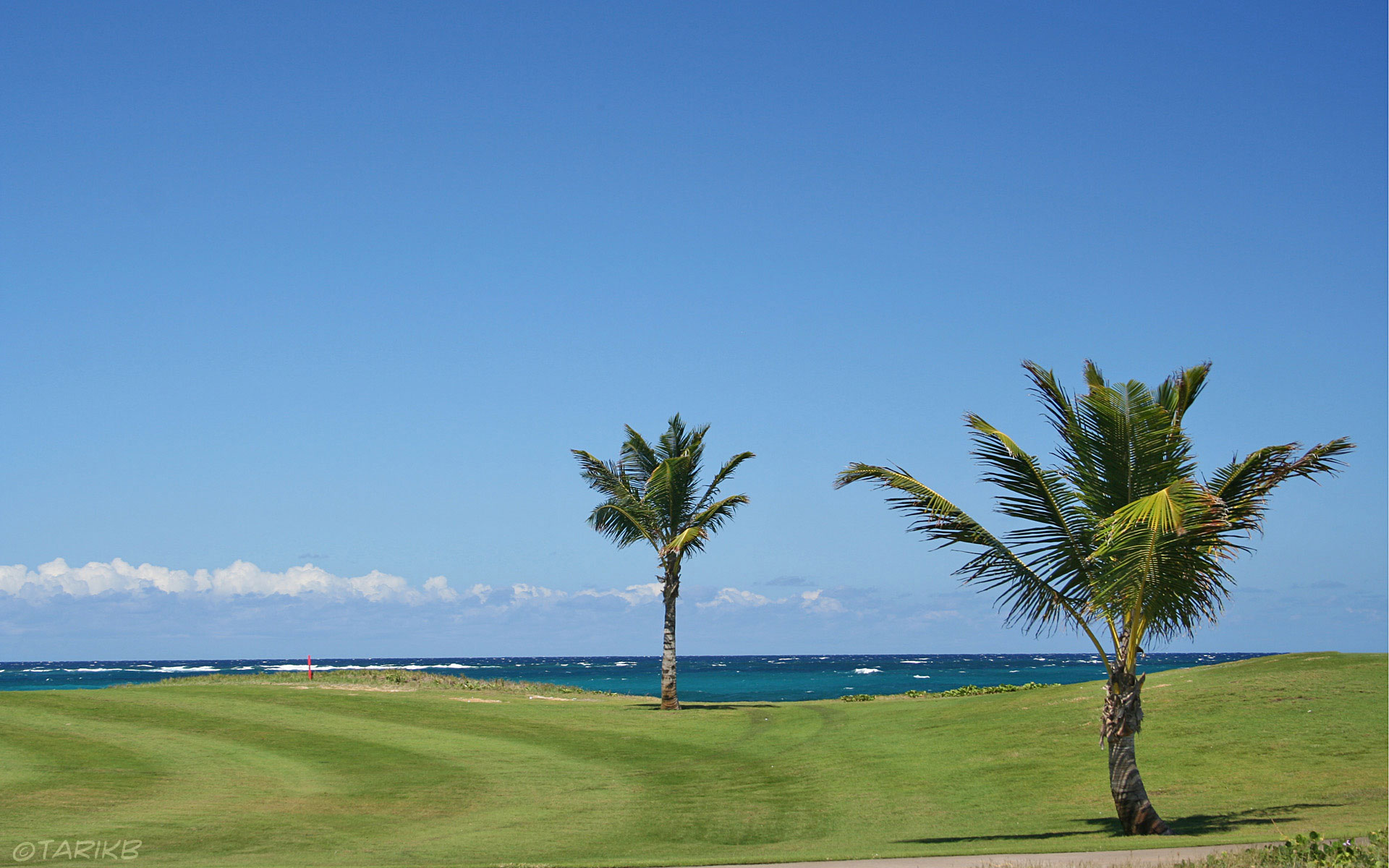 cool amazingamazing golf gunnamatta course barnbougle dunes level in 1920x1200