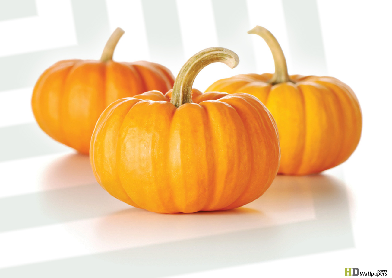 Sweet Pumpkins HD Wallpaper HD Wallpaper 1300x920