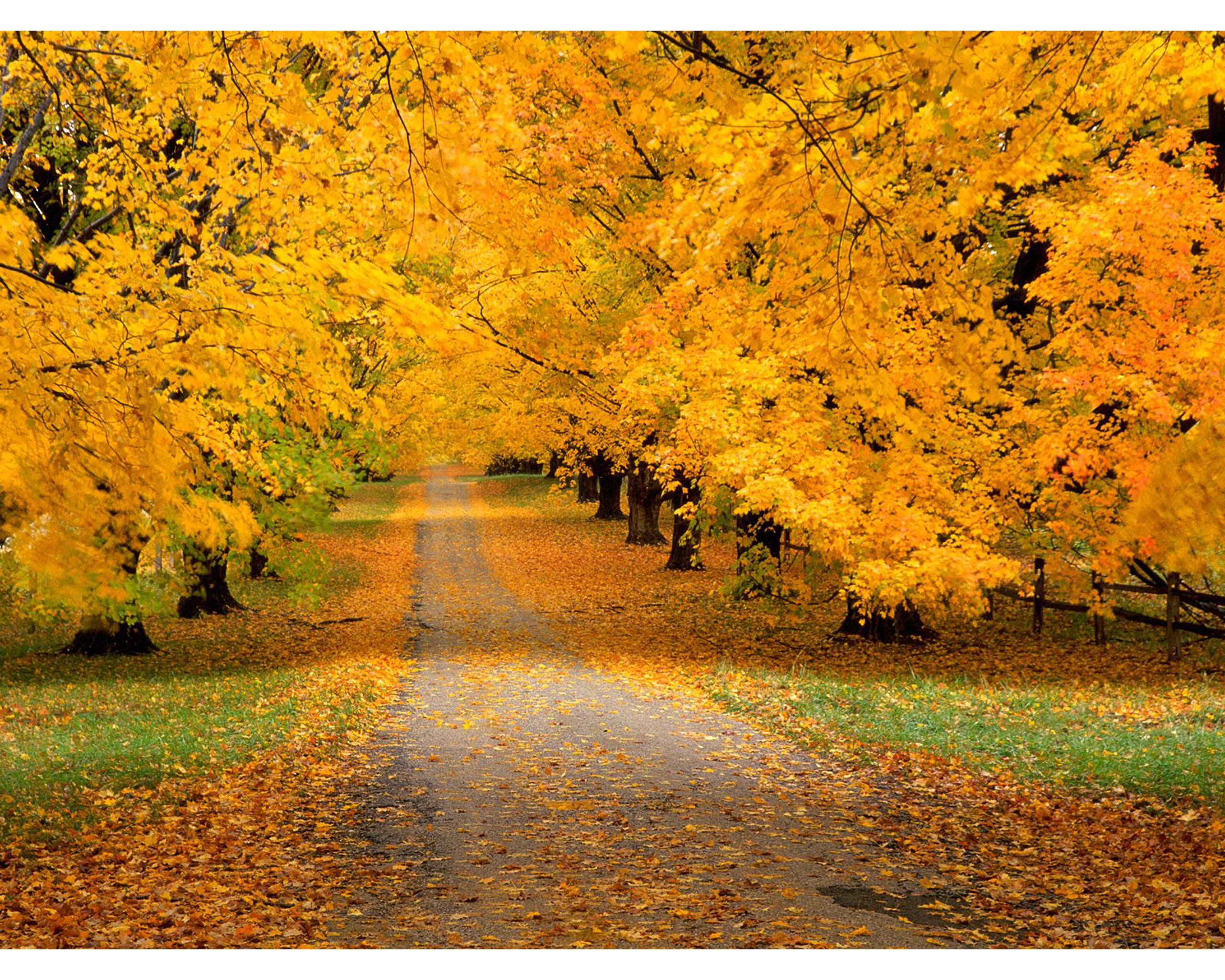 Autumn Road Wallpapers   2560x2048   2311480 2560x2048