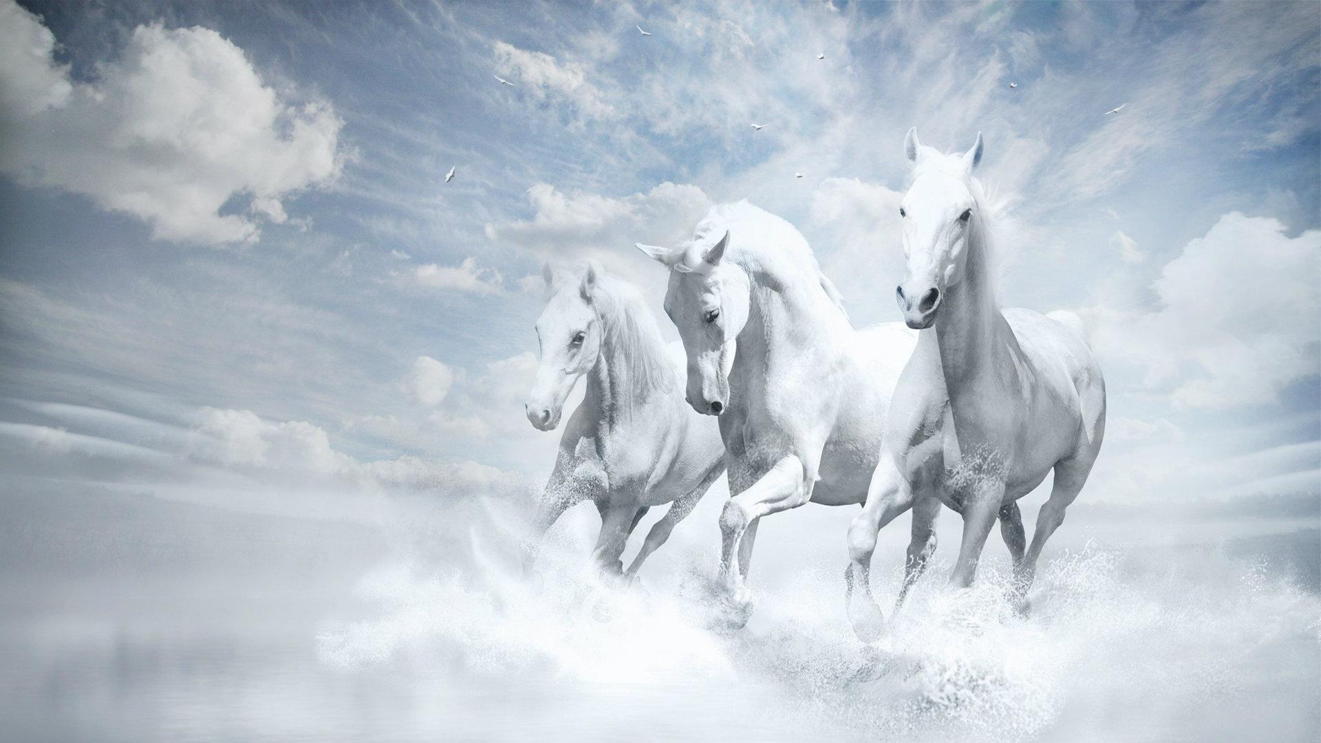 White Horses HD Wallpapers Horses For Desktop HD 1920x1080