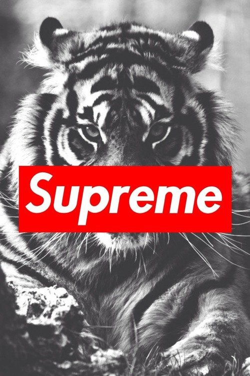 Supreme gir wallpaper wallpapersafari - Hd supreme iphone wallpaper ...