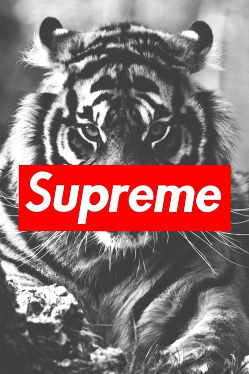 Supreme Logo Tumblr Supreme Tumblr 500x750