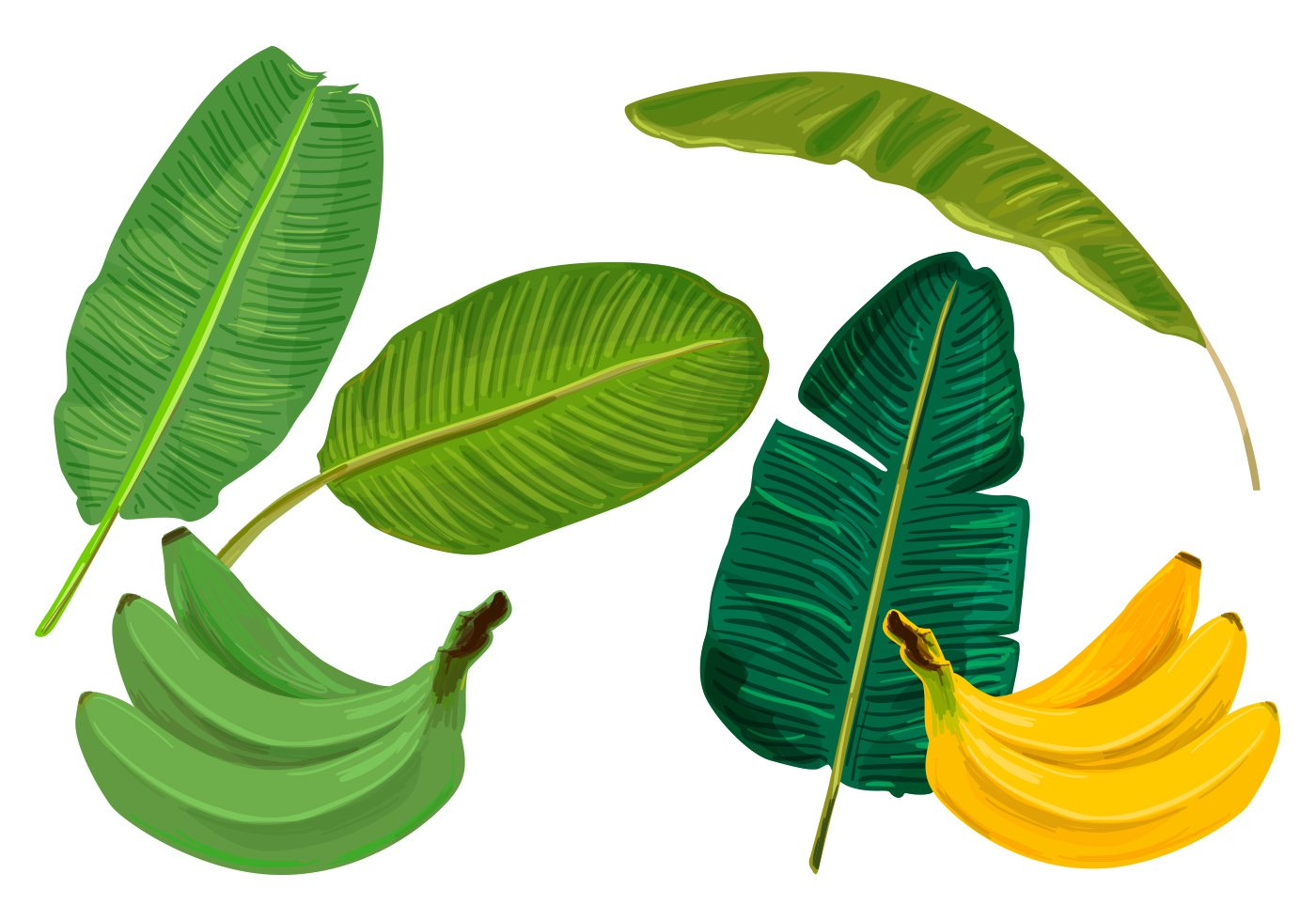 Banana Leaves Vectors   Download Vector Art Stock Graphics 1400x980